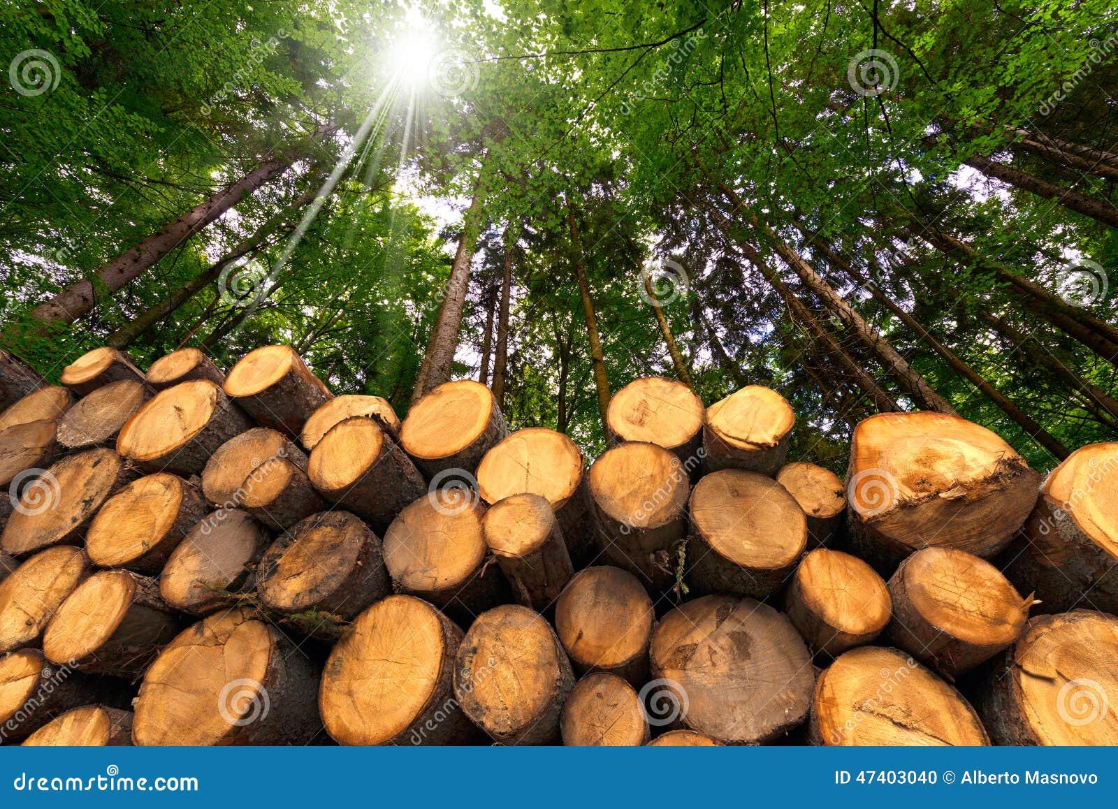 Logs de madeira com a floresta no fundo