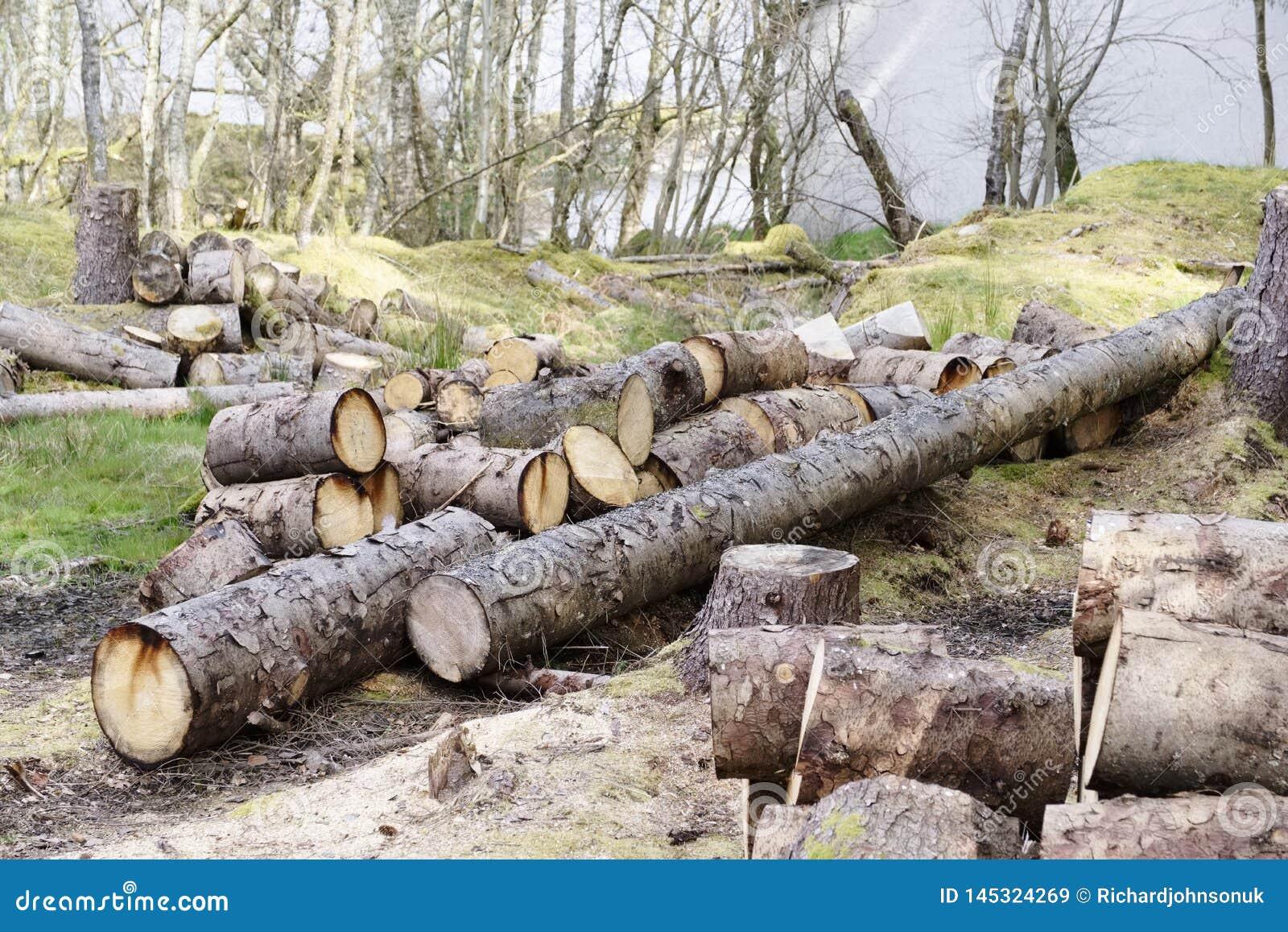 Logs de madeira desbastados para o uso da venda no lugar do fogo em casa armazenado na energia verde da biomassa das madeiras da
