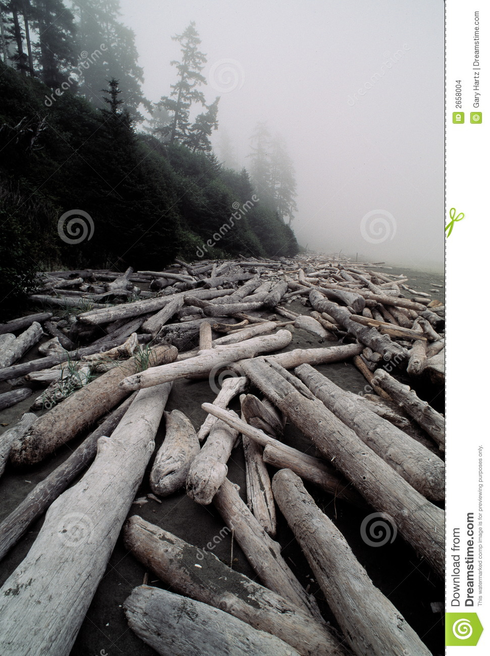 Logs on foggy beach
