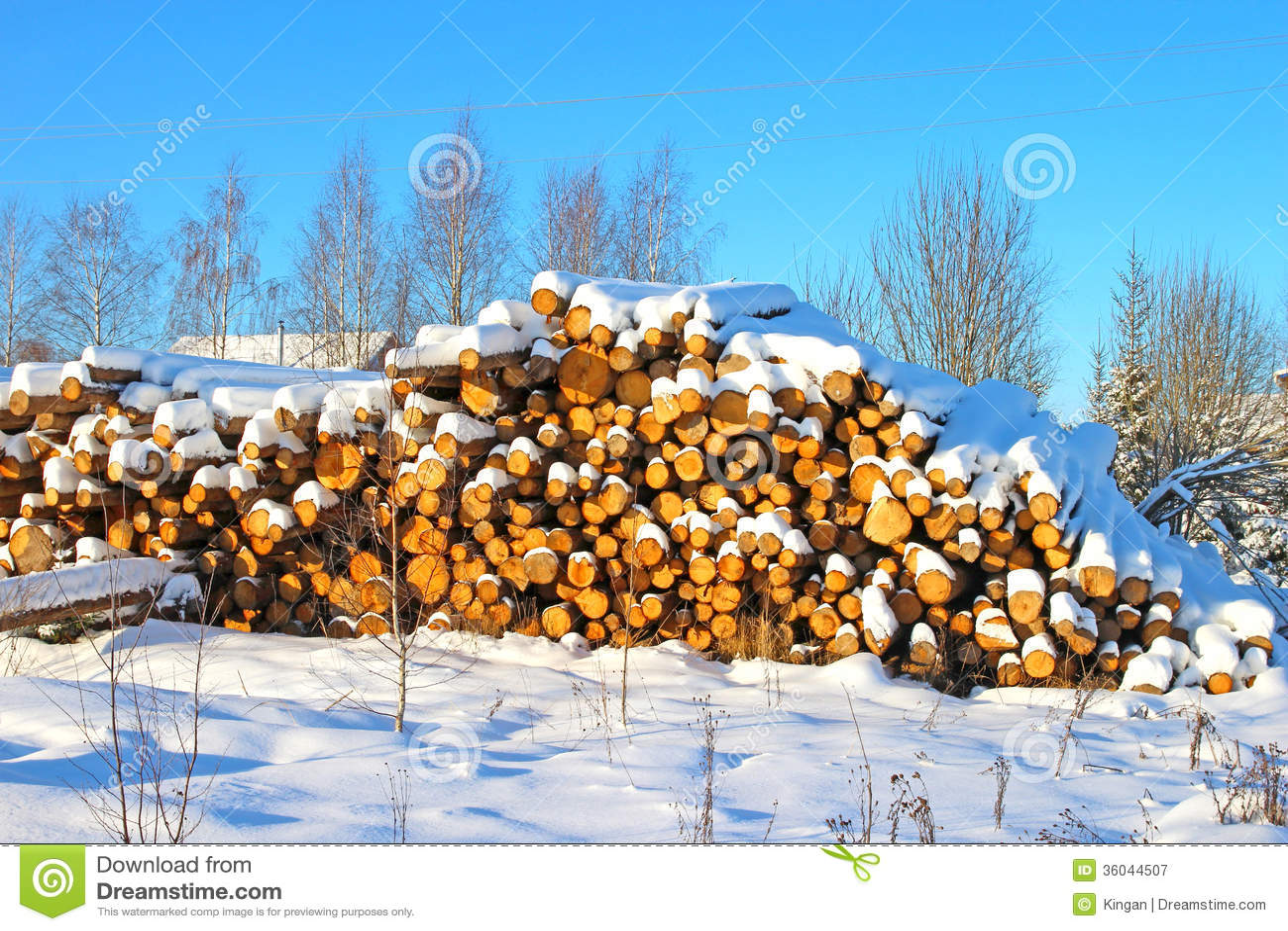 timber harvesting business plan