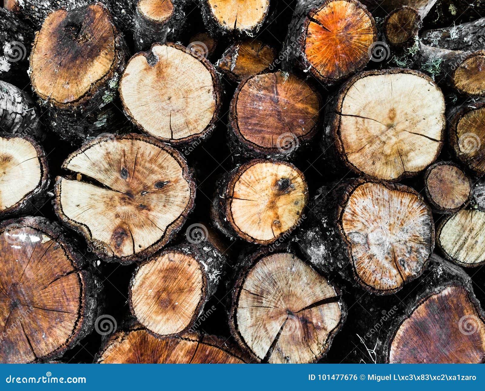 Logs redondos da árvore