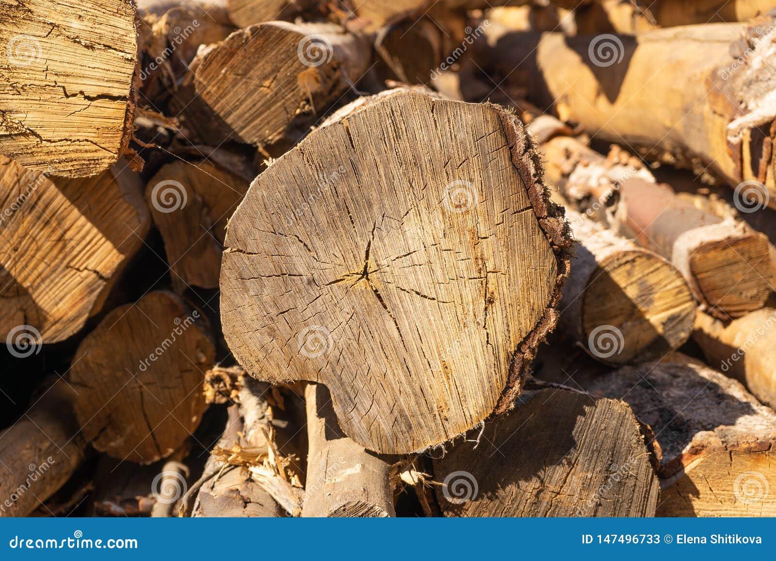 Logs Struttura organica naturale con le crepe e una superficie ruvida