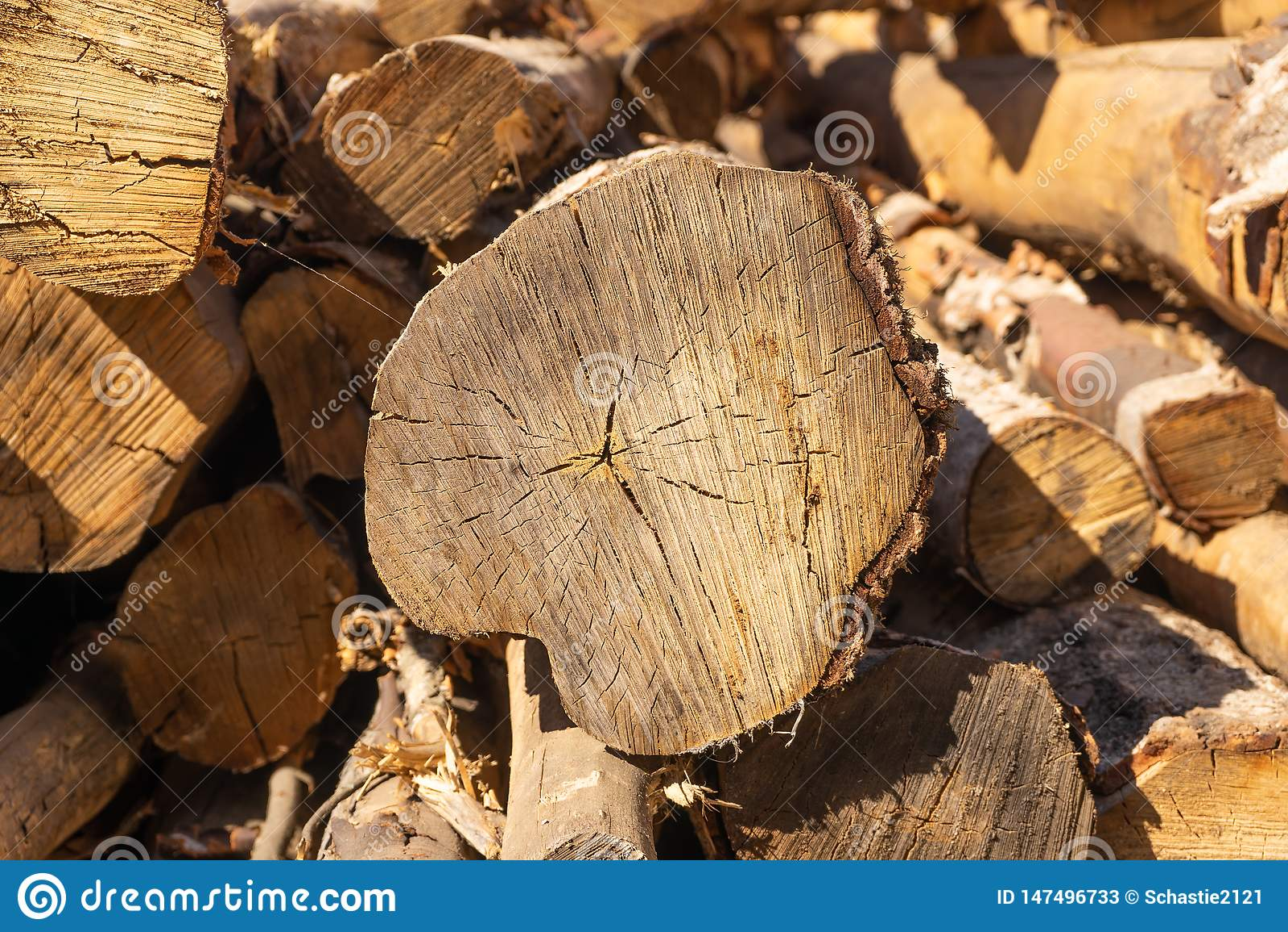 Logs Texture organique naturelle avec des fissures et une surface approximative