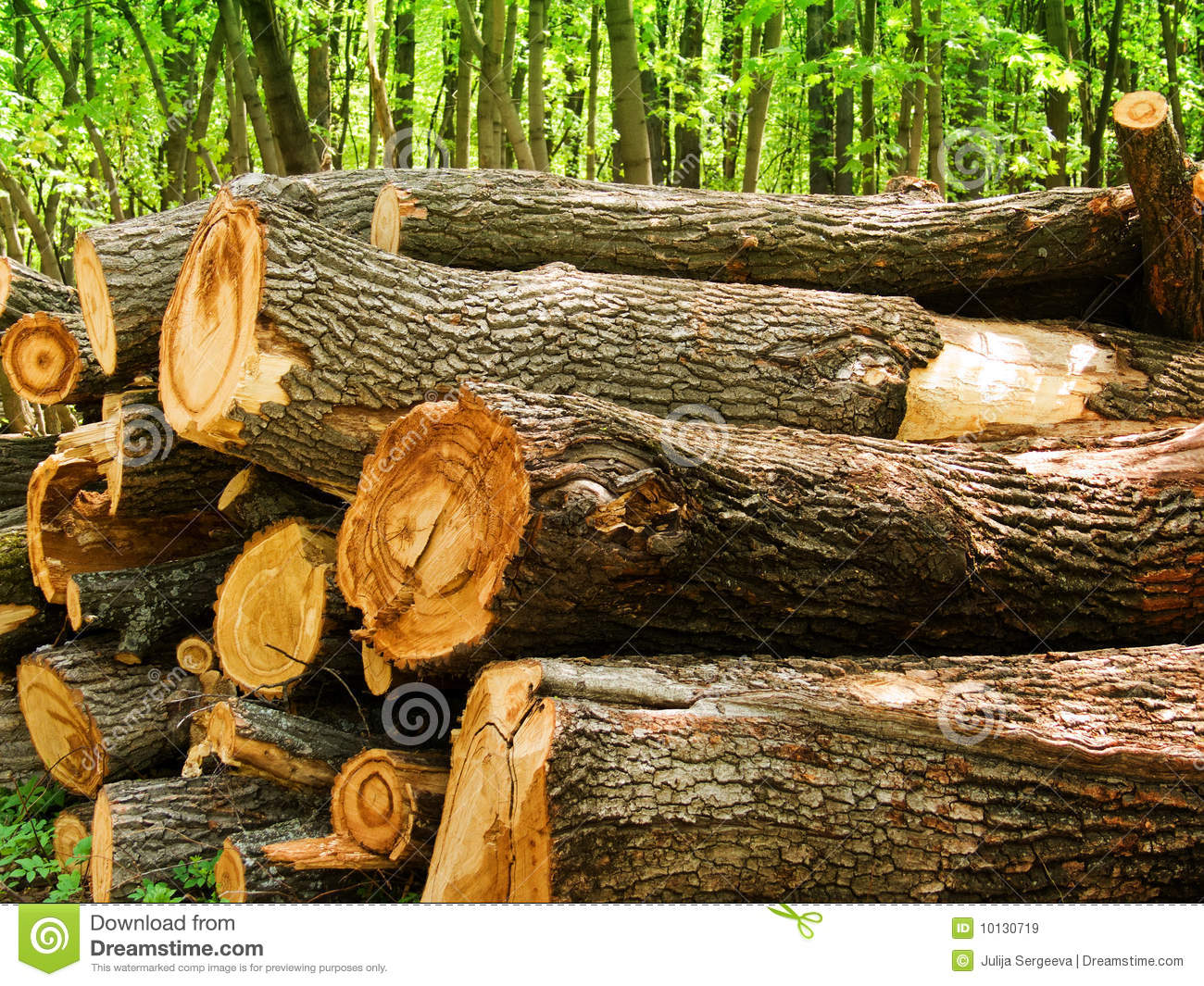 logs of a tree an oak in wood royalty free stock images