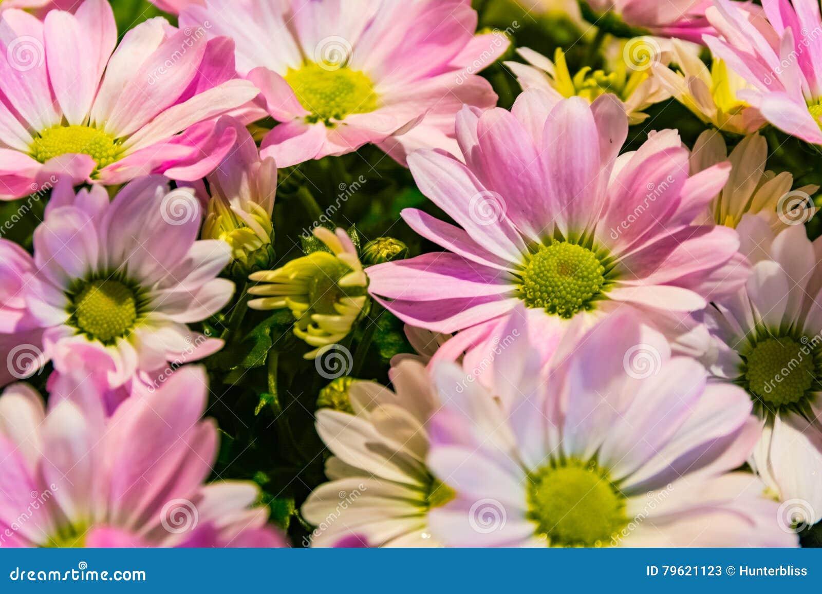 A loja radial de Bouqet das pétalas cor-de-rosa das flores do verde fora ajunta o CCB