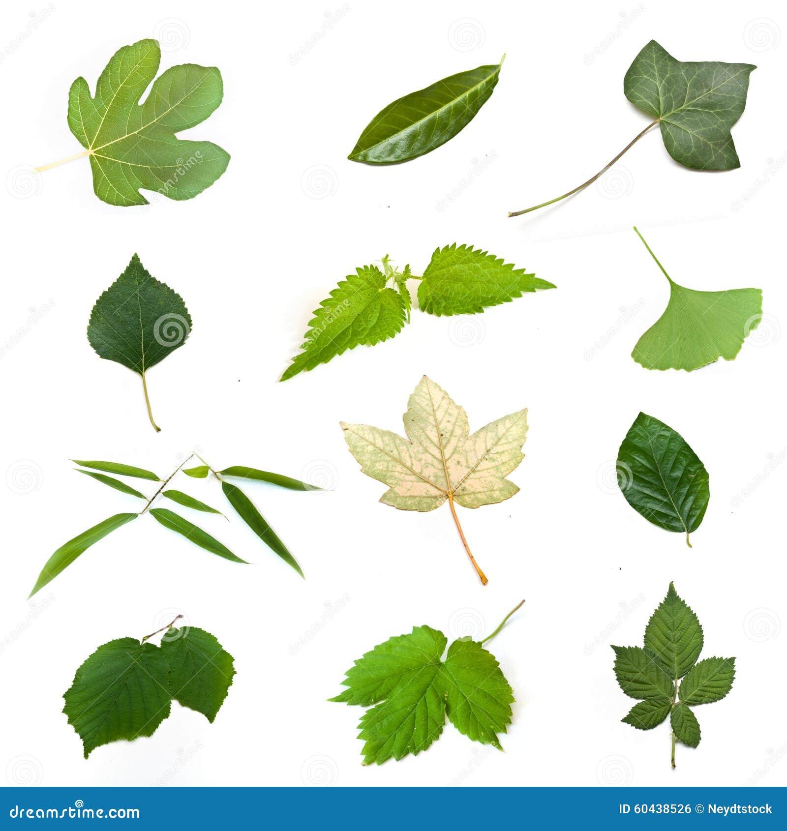 Lokalisierte Grüne Blätter Von Verschiedenen Bäumen
