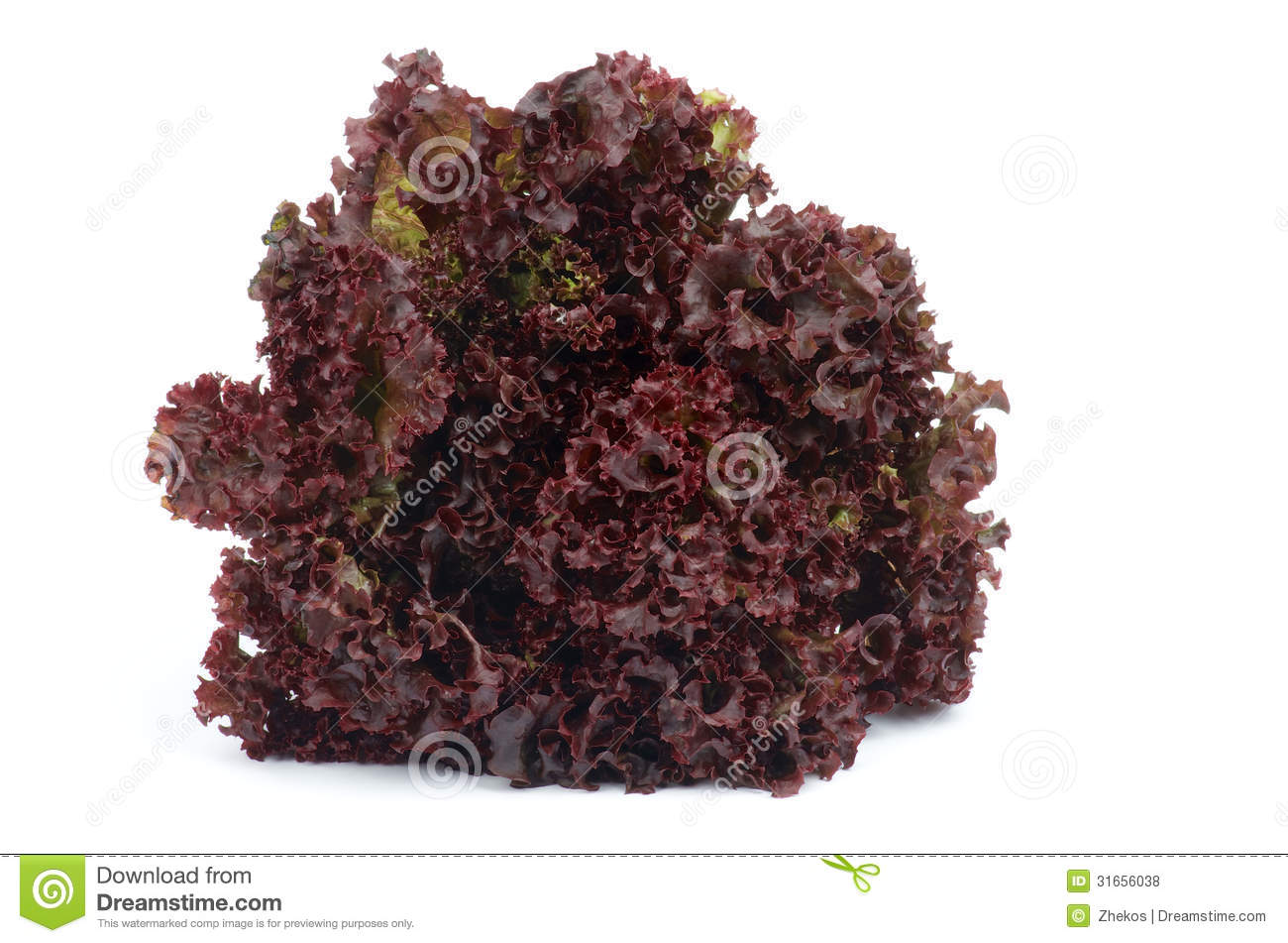 lollo rosso lettuce stock photo image of bunch rosso 31656038. Black Bedroom Furniture Sets. Home Design Ideas