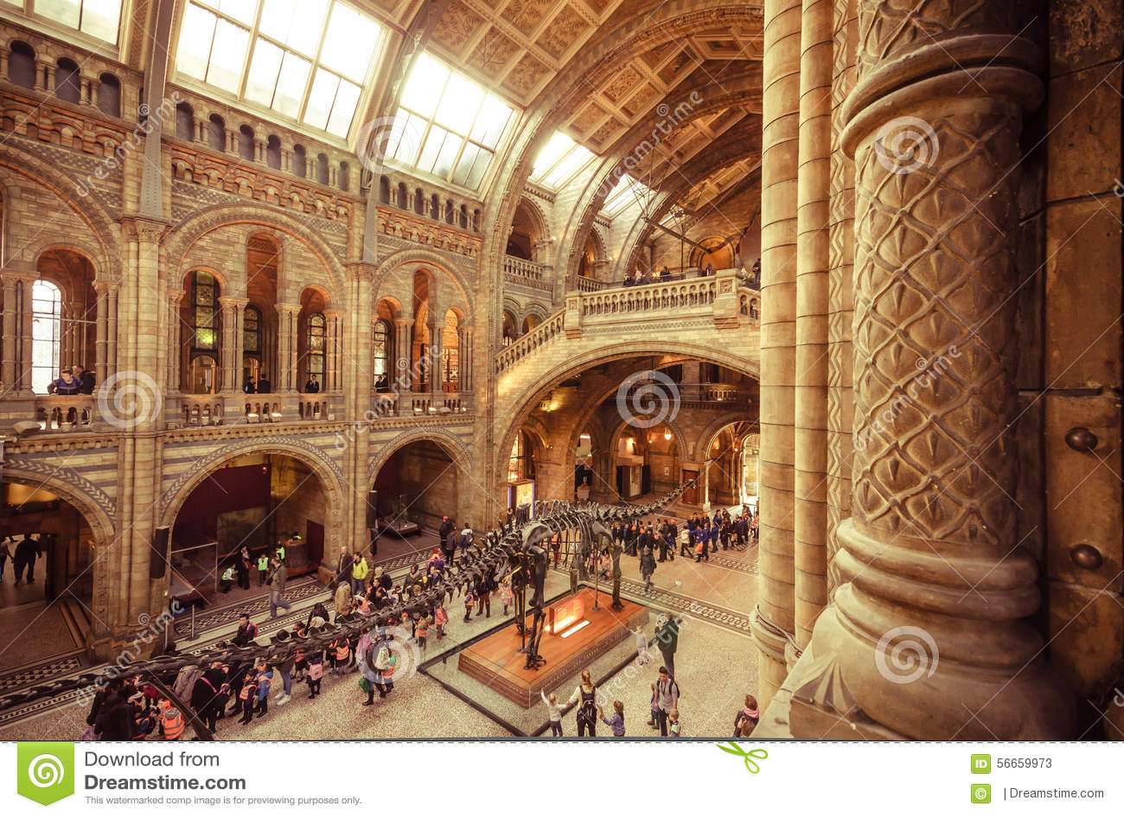 Vatican Museum Floor Plan London Museums Natural History Museum Hintze Hall