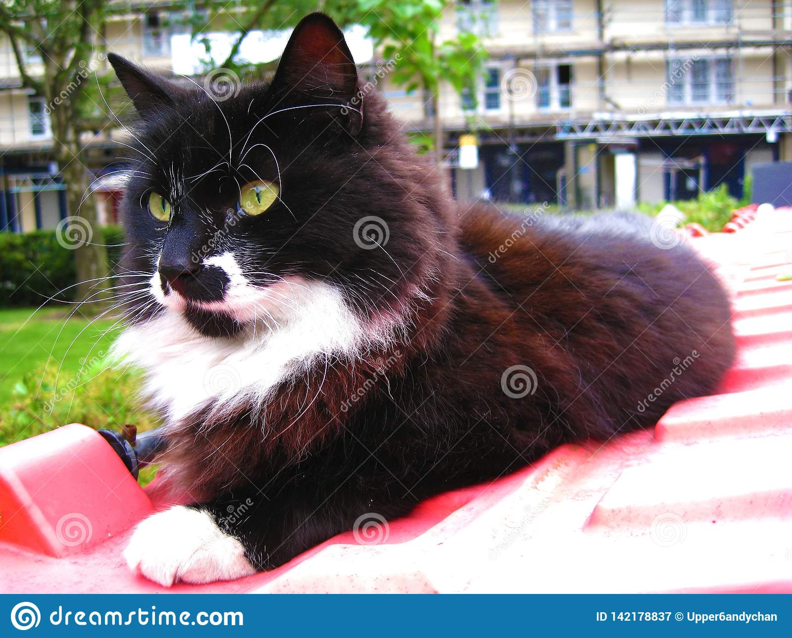 A black and white cat with yellow eyes relaxing on a red bin in Portobello Market in Notting Hill