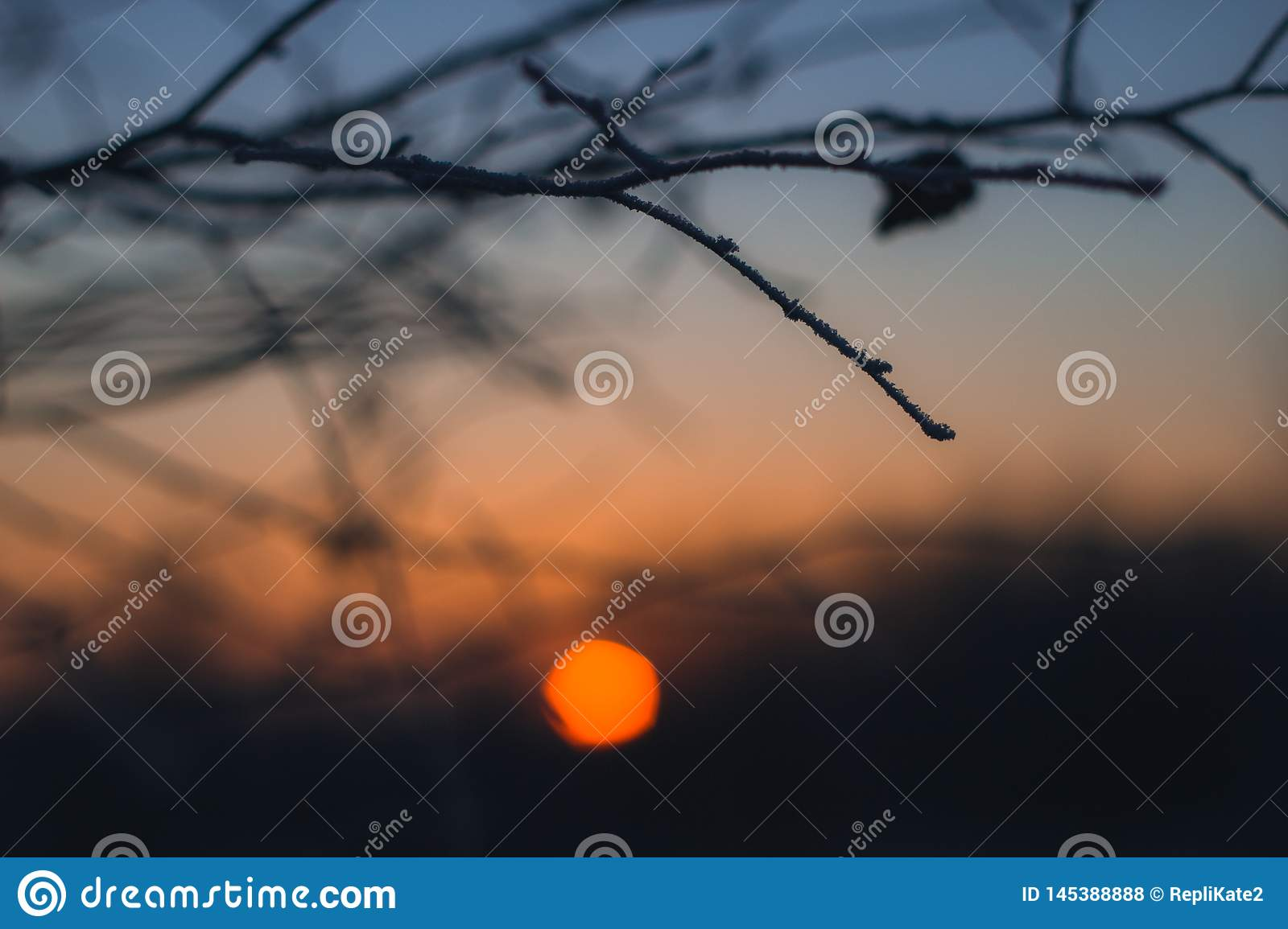 A lone branch on the bright orange backdrop of the setting sun. Branch without leaves close-up. Beautiful winter sunset bokeh.