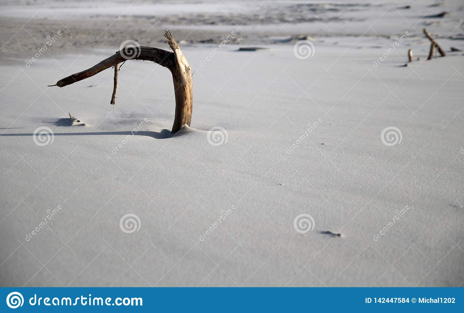 Lone branch in the sand on the beach in Debkach, Poland