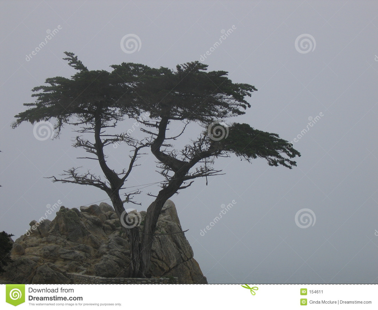 The Lone Cypress Tree