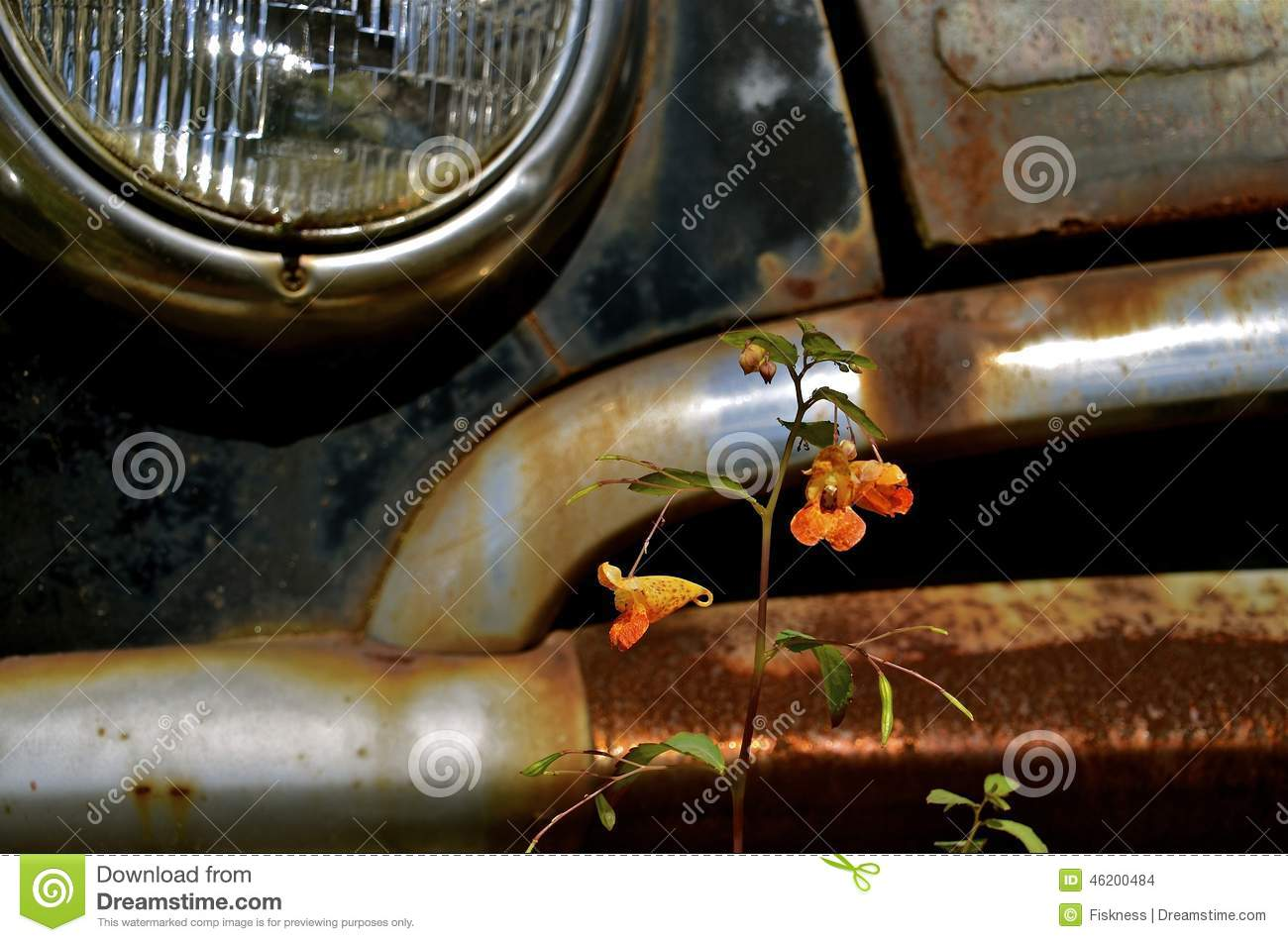 Lone flower grows in front of car bumper