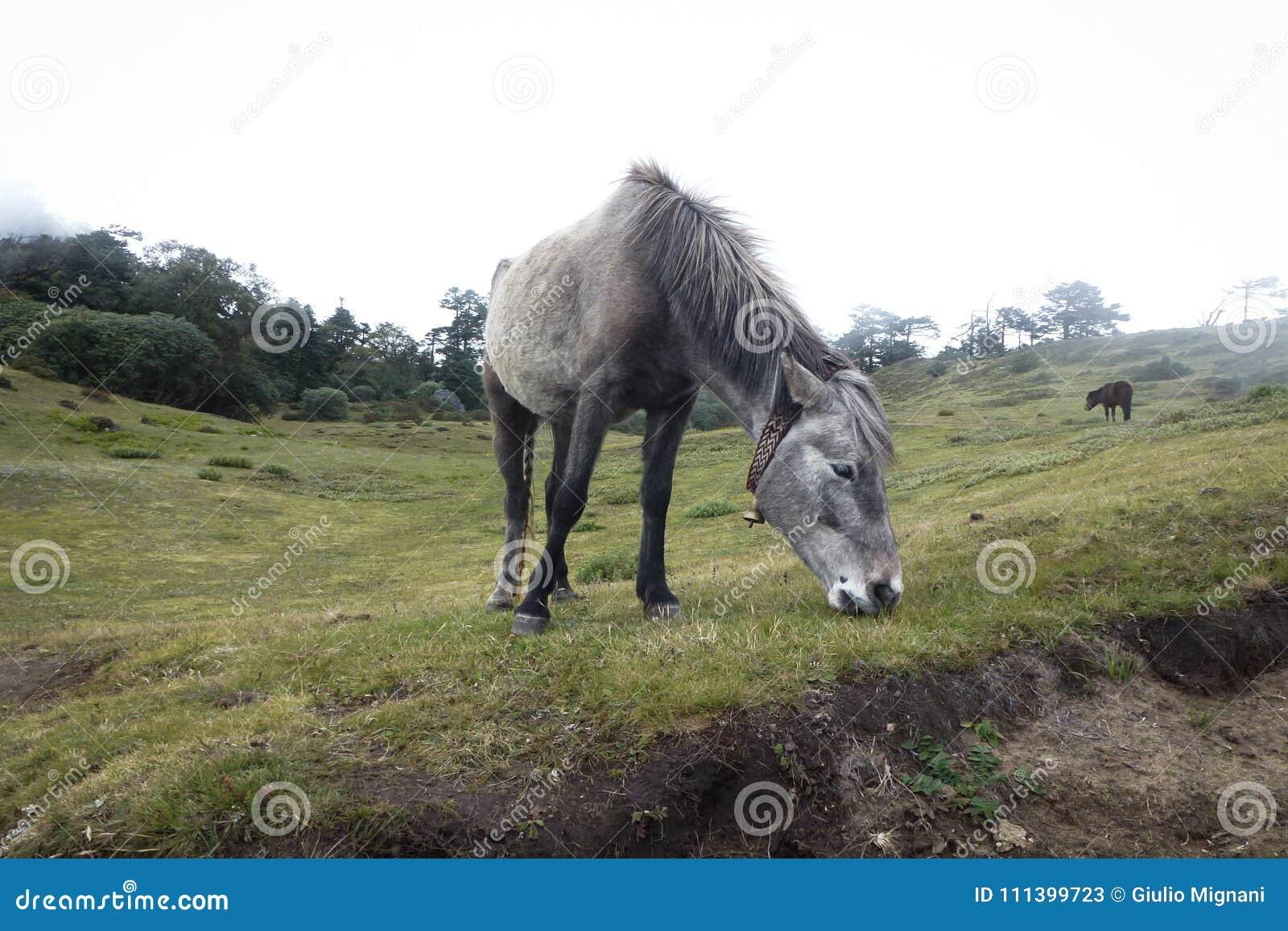 Horse eating grass, Namche Bazaar, Everest Base Camp trek, Nepal
