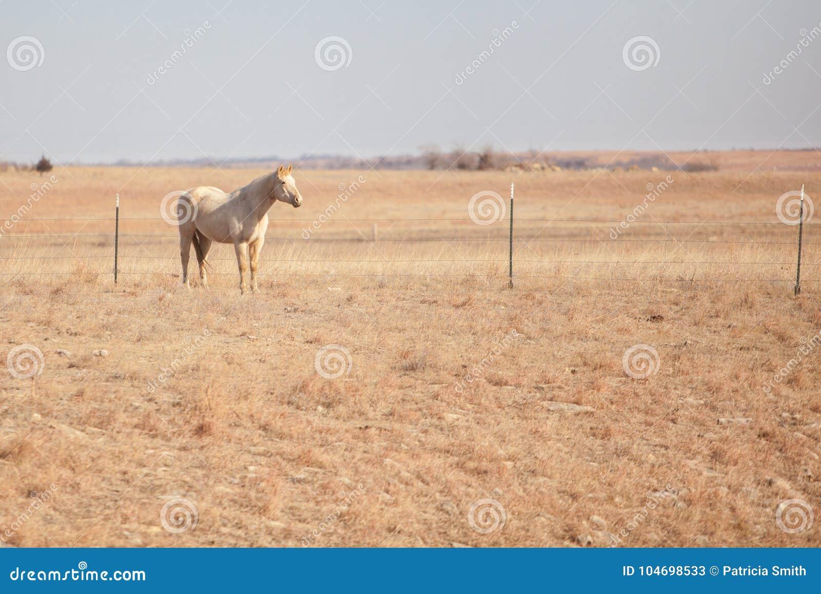 Lone Palomino horse in field