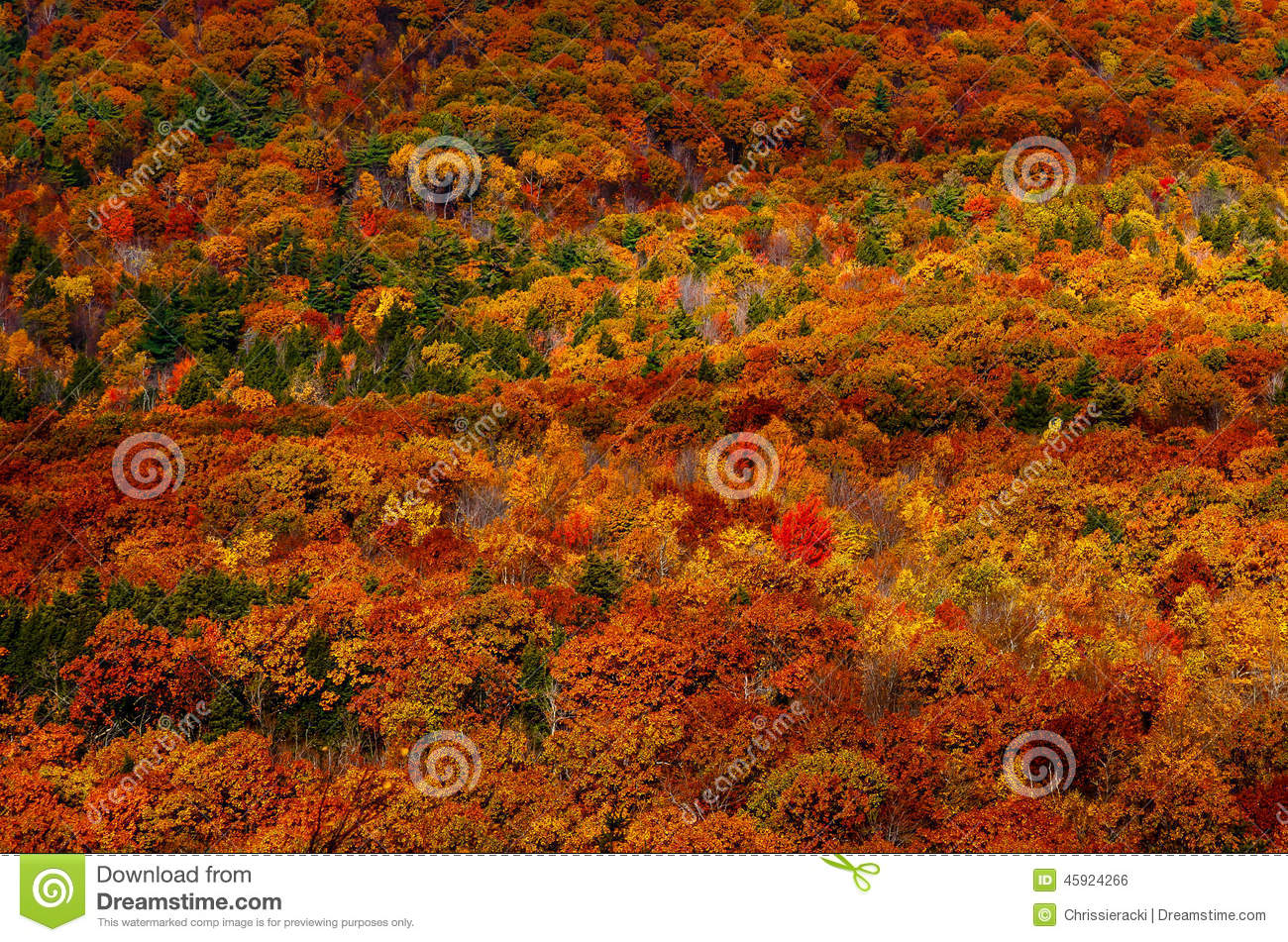 Lone Red Tree in Autumn Mountain Landscape
