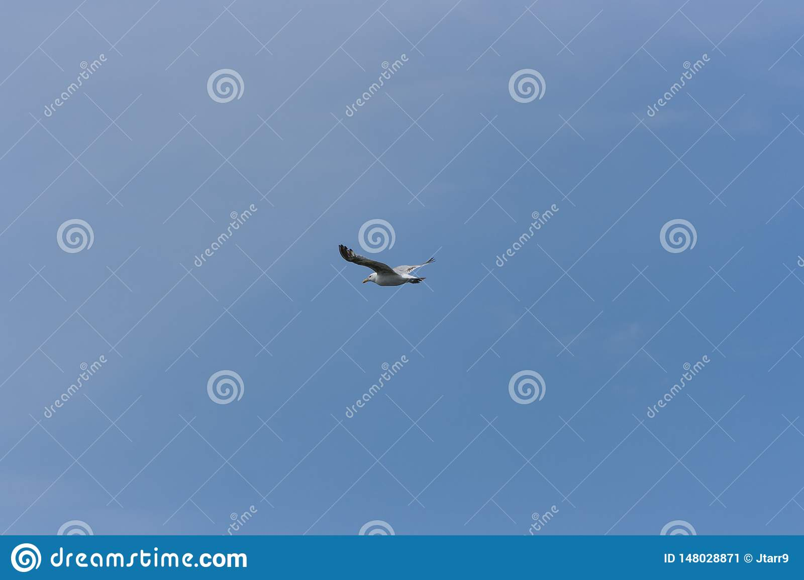 Lone Seagull on Clear Blue Sky