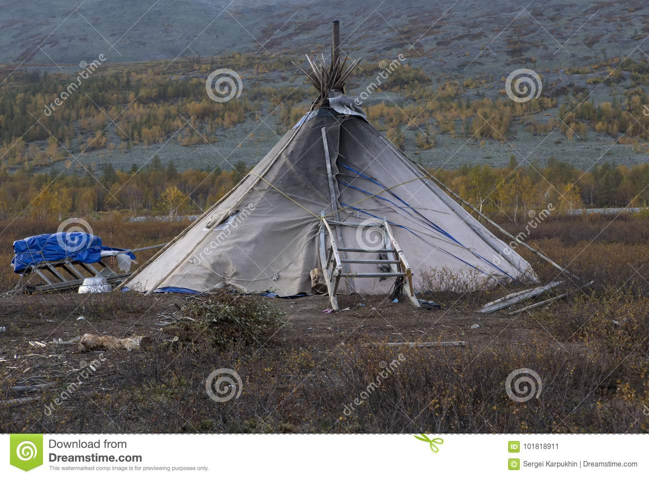 The lone tent of reindeer with sleds.