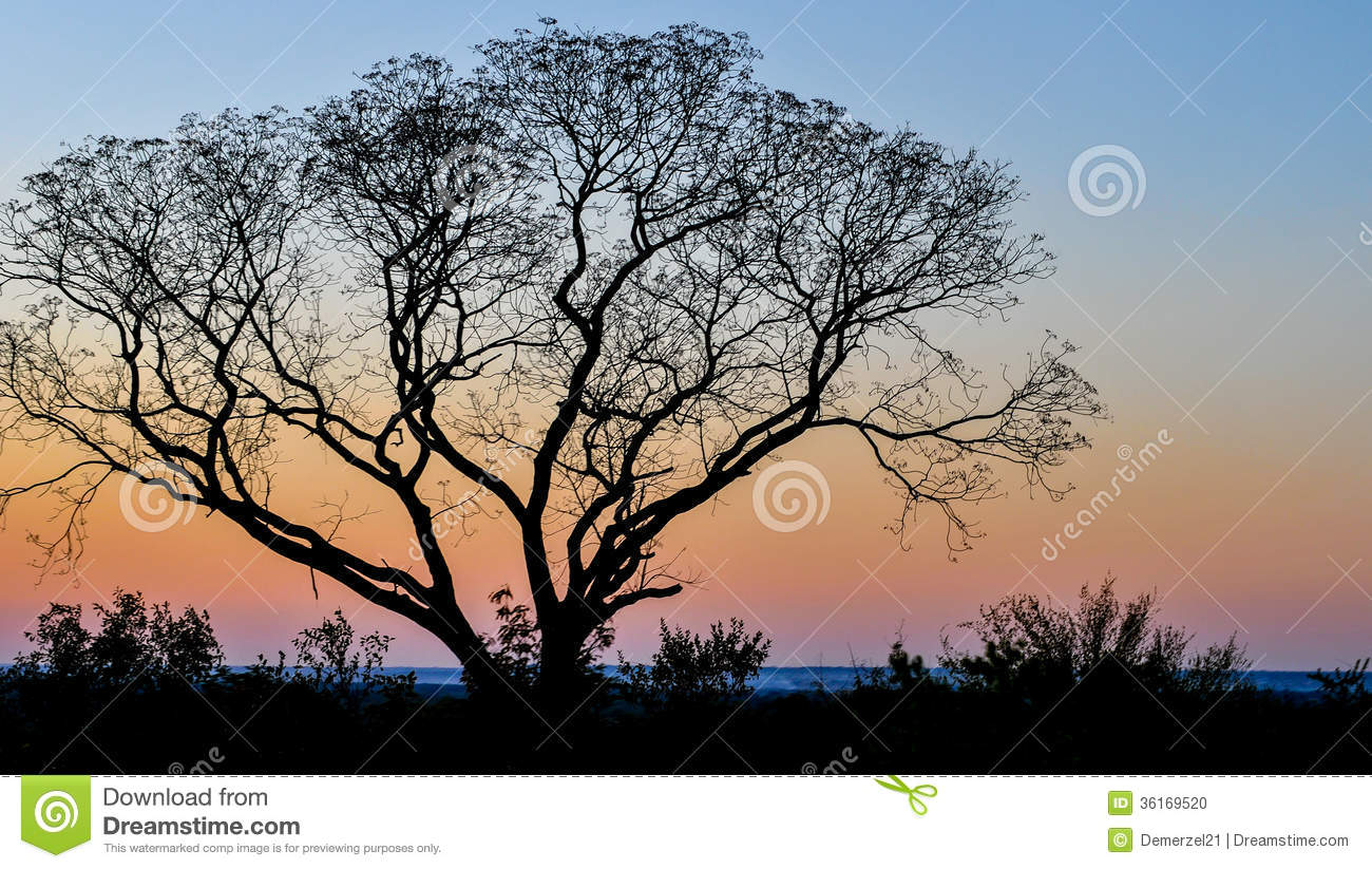 Lone tree against the sunset in Livingstone, Zambia