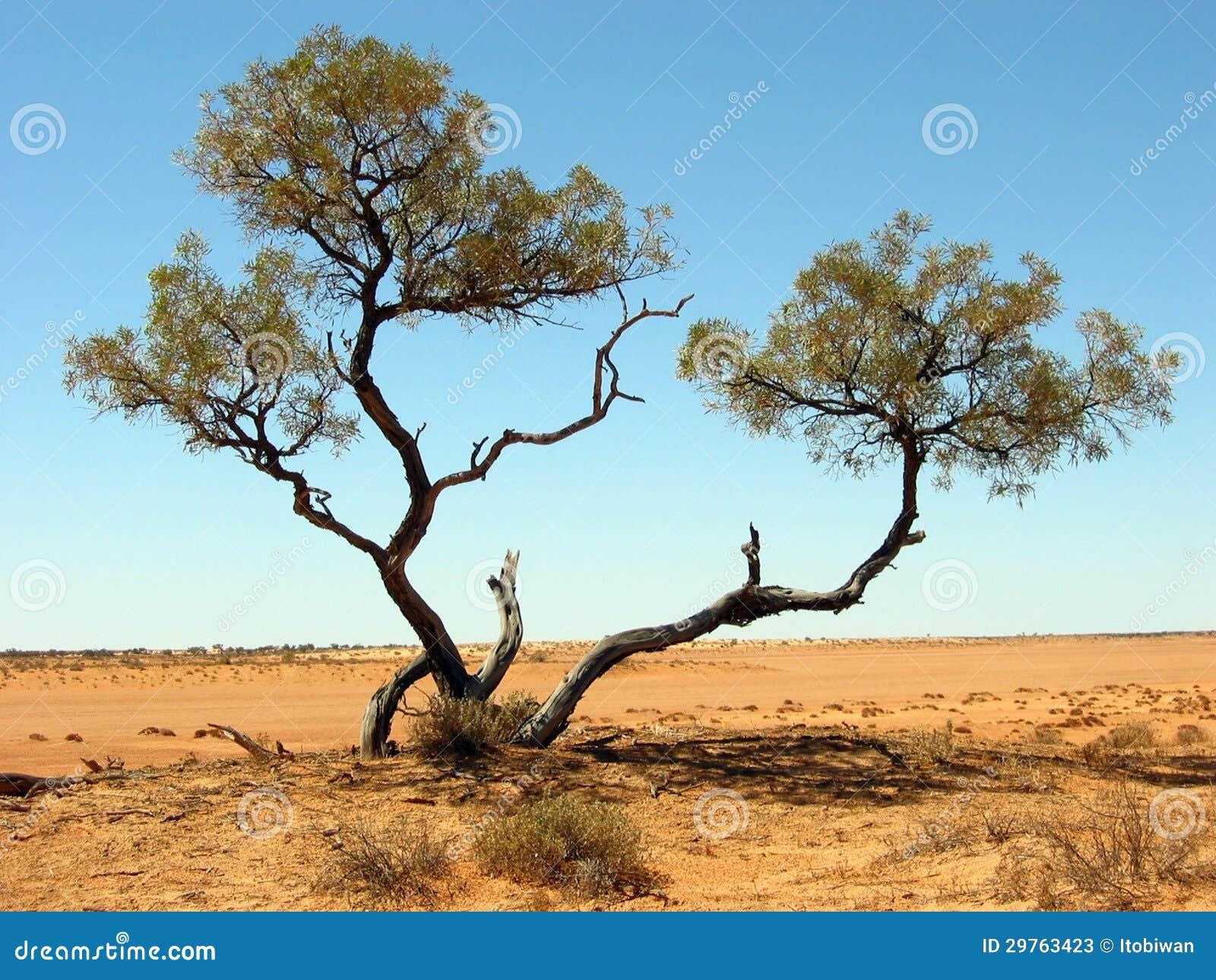 Australian Desert Animals