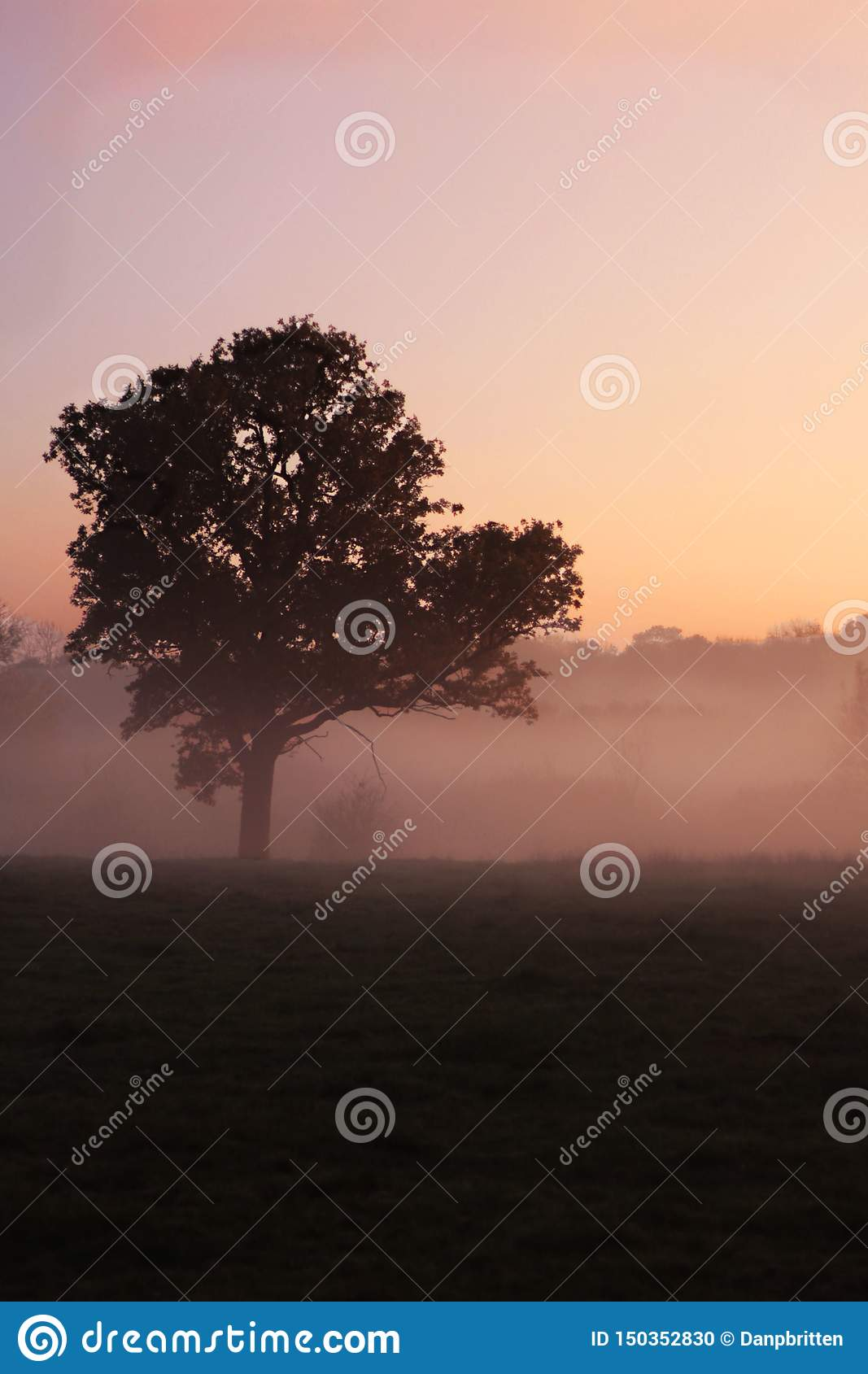 A lone tree on a foggy morning