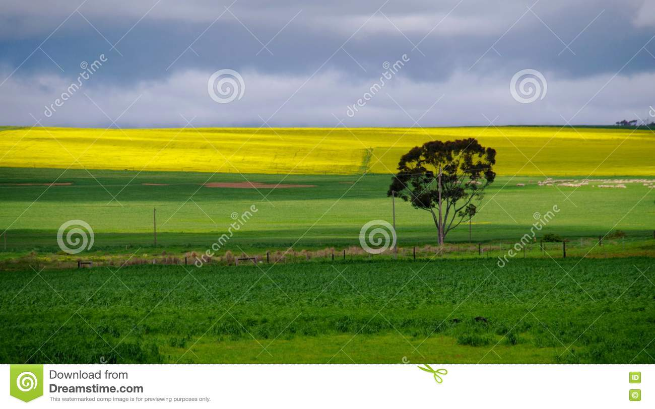 Caledon South Africa  city pictures gallery : ... meadow landscape photographed near caledon south africa 73248795