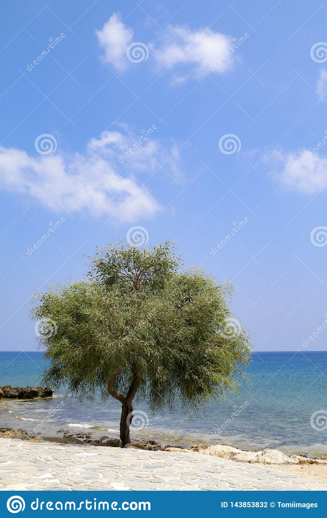 Lone tree beside sea on sunny day with blue sky