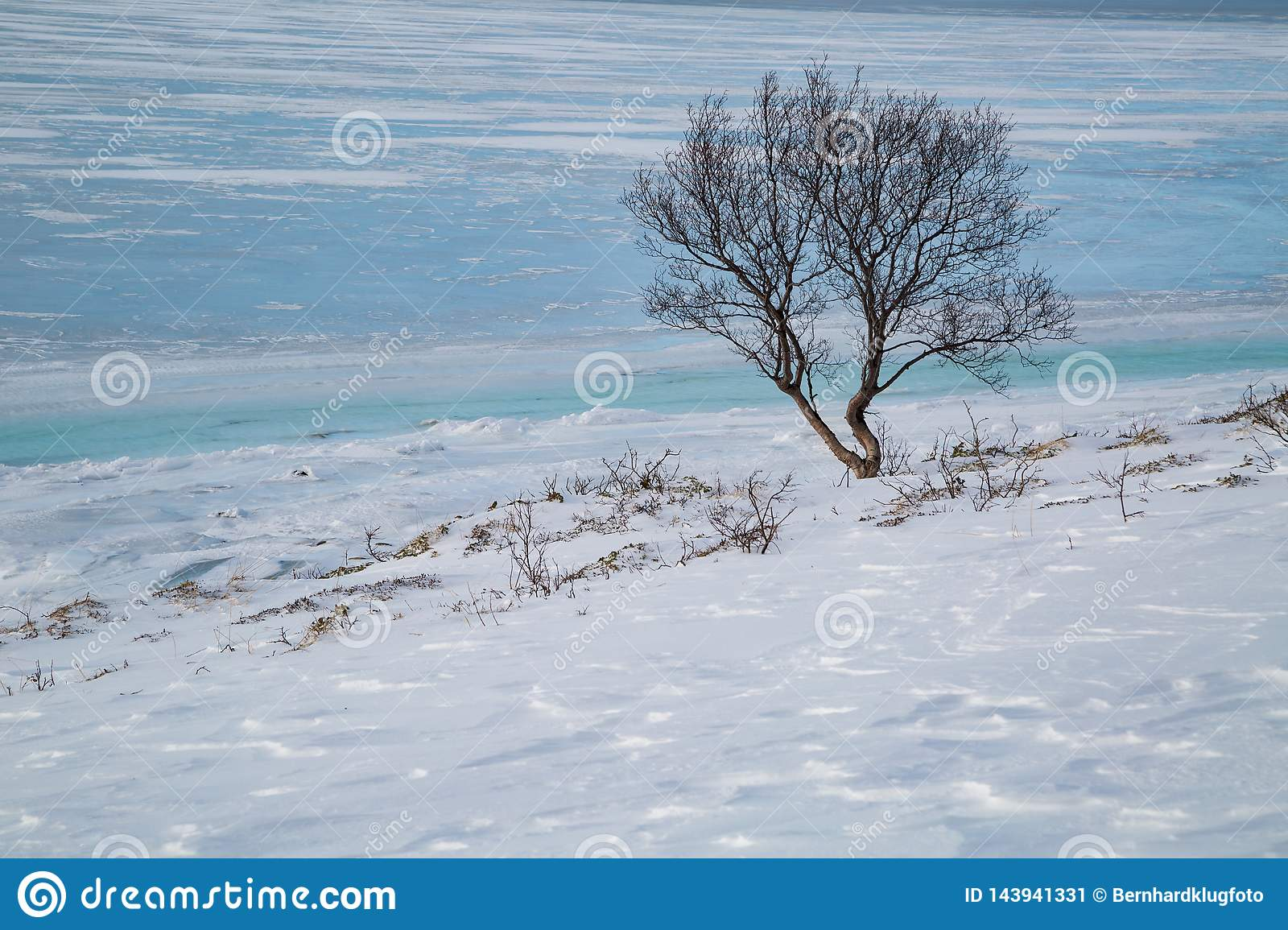 Lone tree on the shore of a frozen fjord in Norway