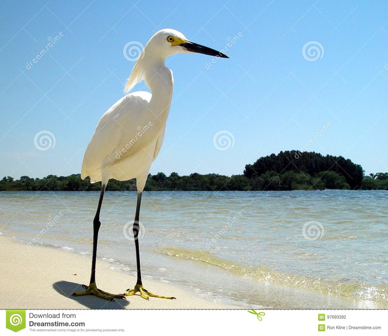 lone-white-heron-sandy-florida-beach-blu