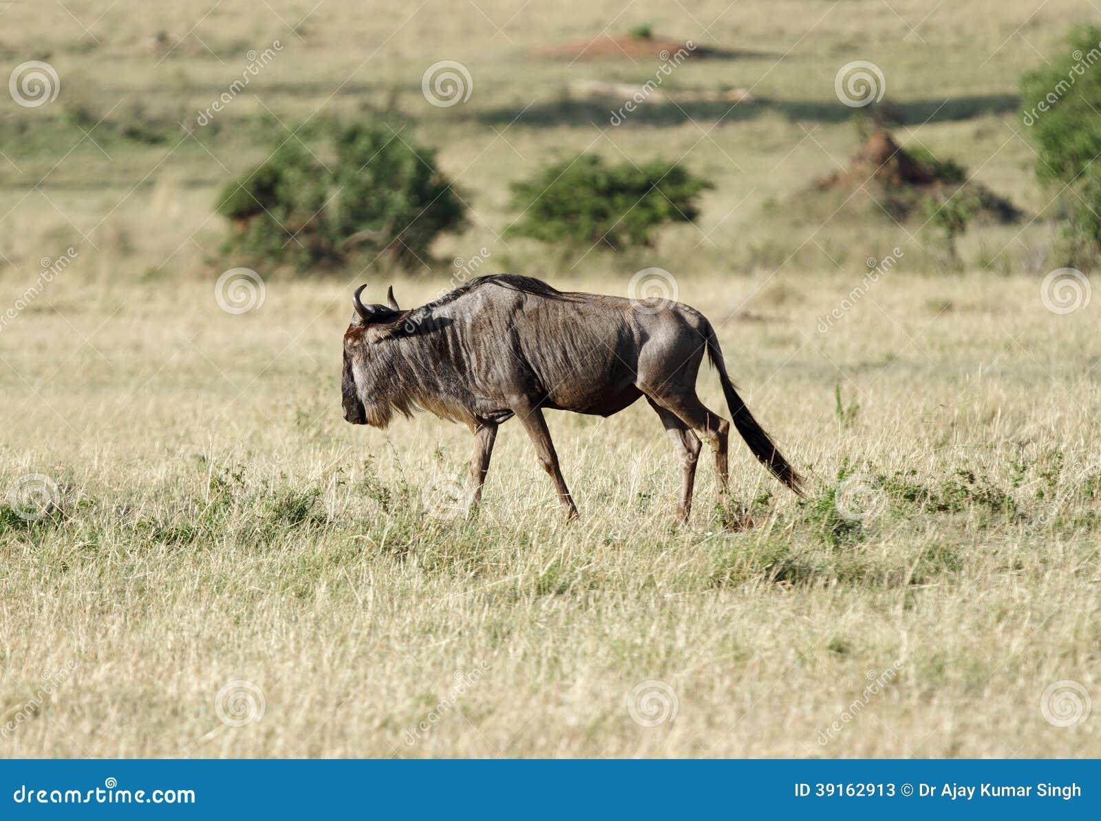 in the grassland Ungulate Grasslands