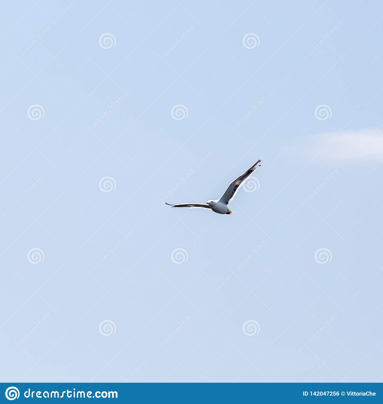 Loneliness Freedom Seagull Flying In The Blue Sky Over The