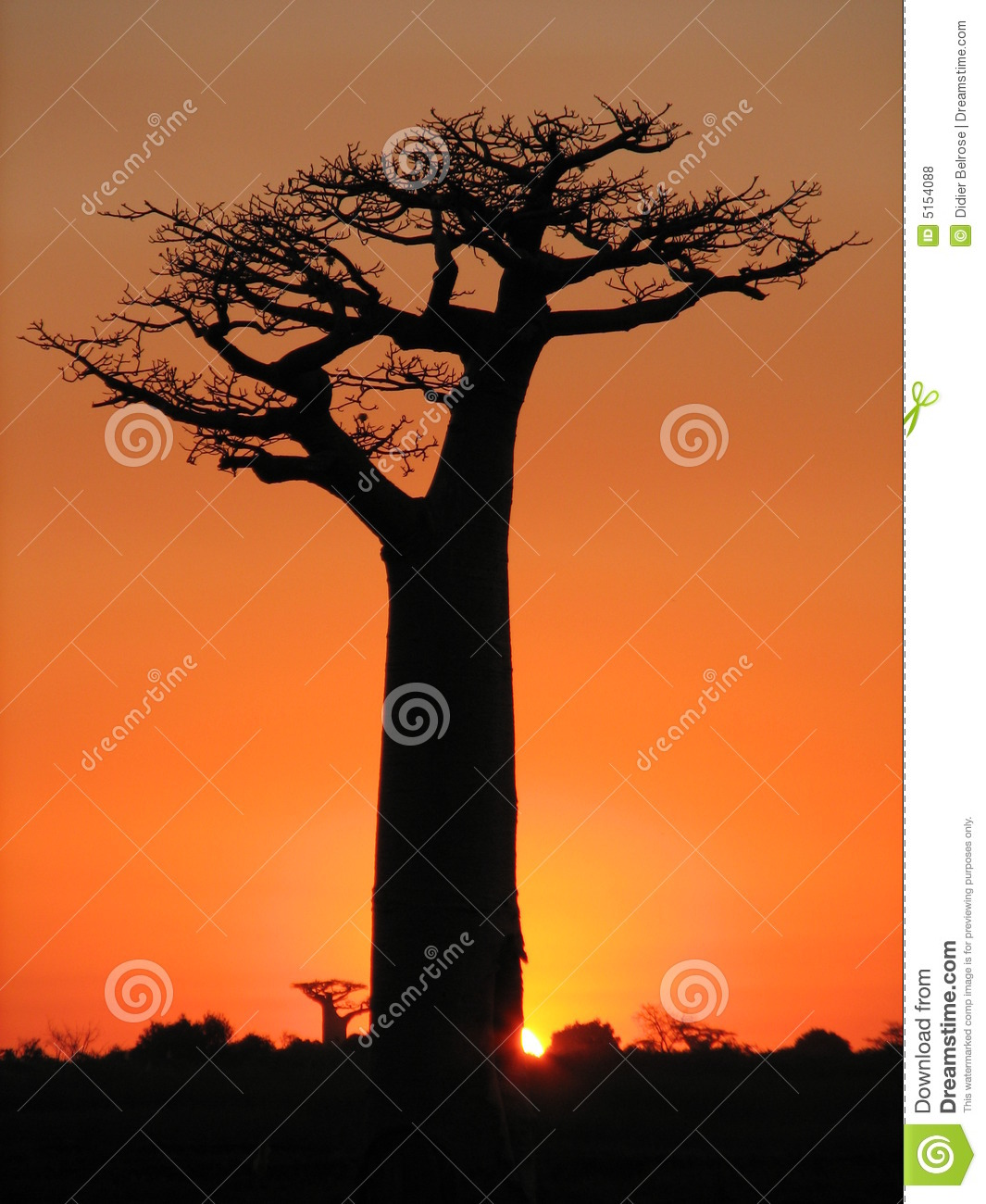 Download Lonely baobab at sunset stock photo. Image of orange, tourism - 5154088