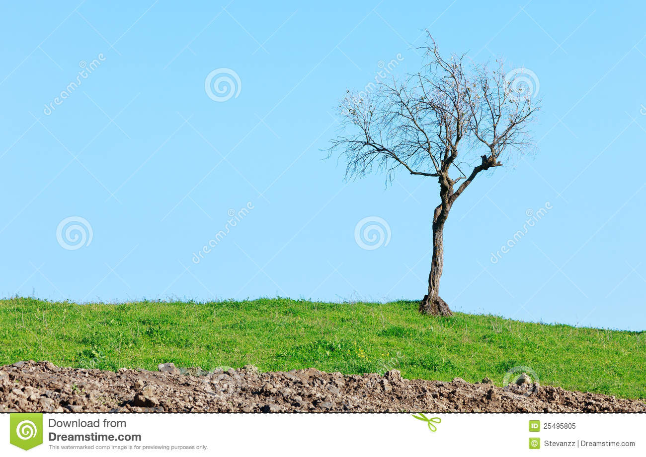 Lonely Bare Tree Green Grass On Blue Sky Royalty Free ...