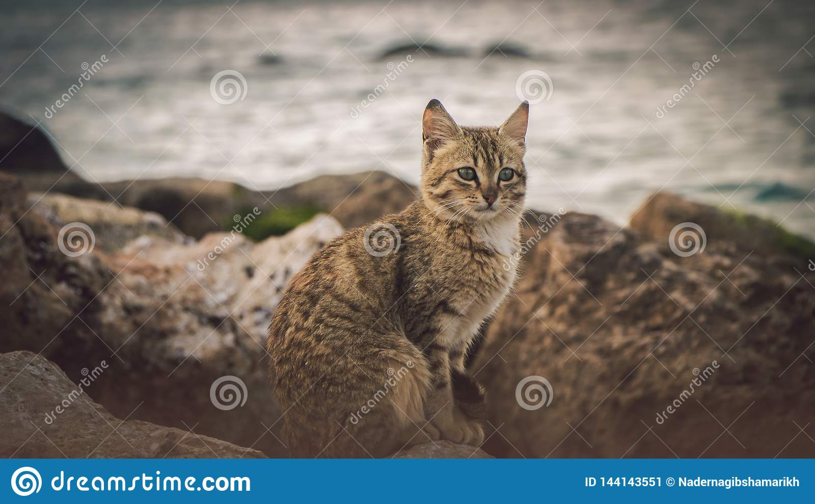 Lonely brown cat look at the sea