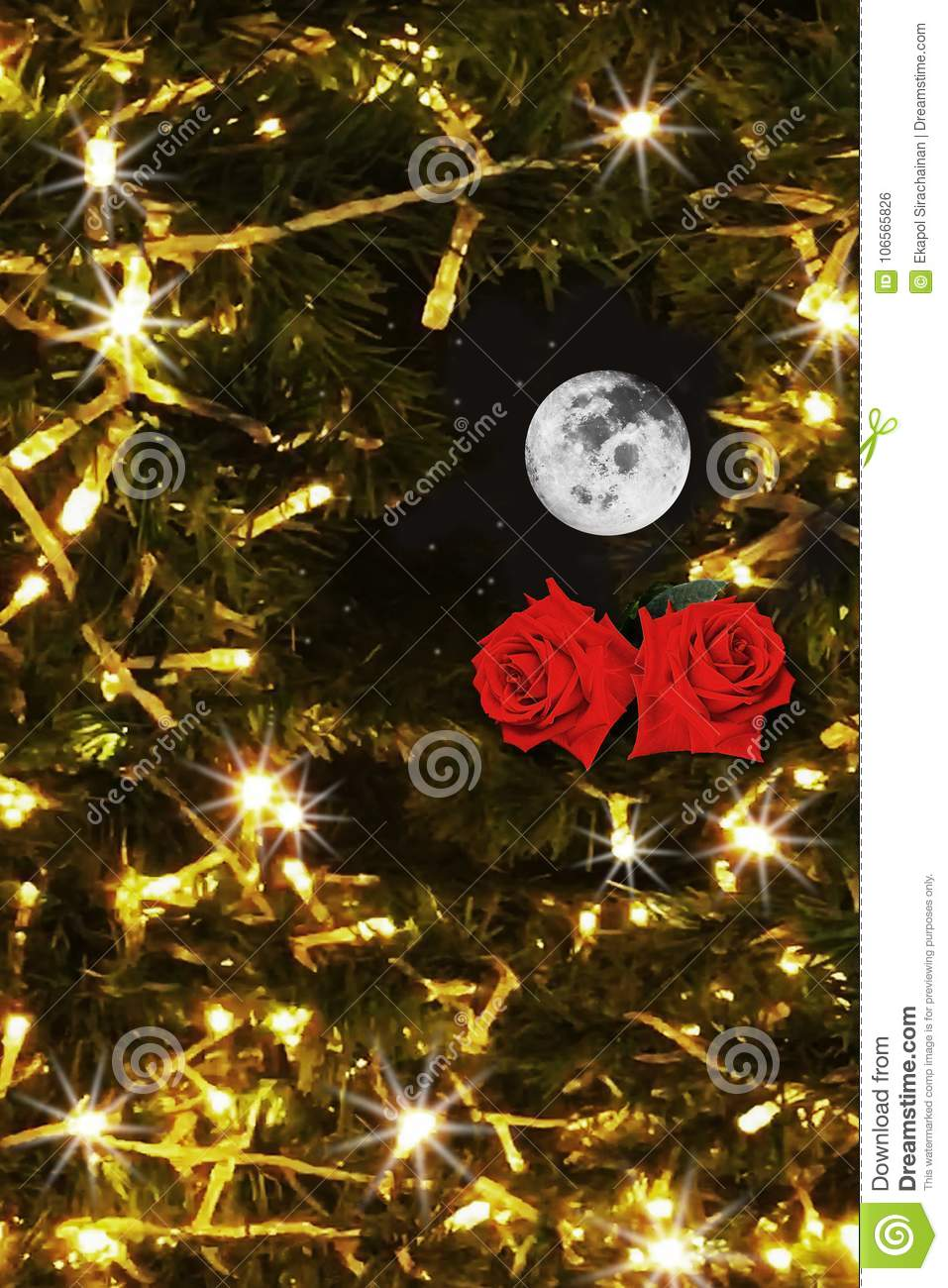 Lonely Christmas.Lonely Christmas Night With Two Beautiful Red Roses Full