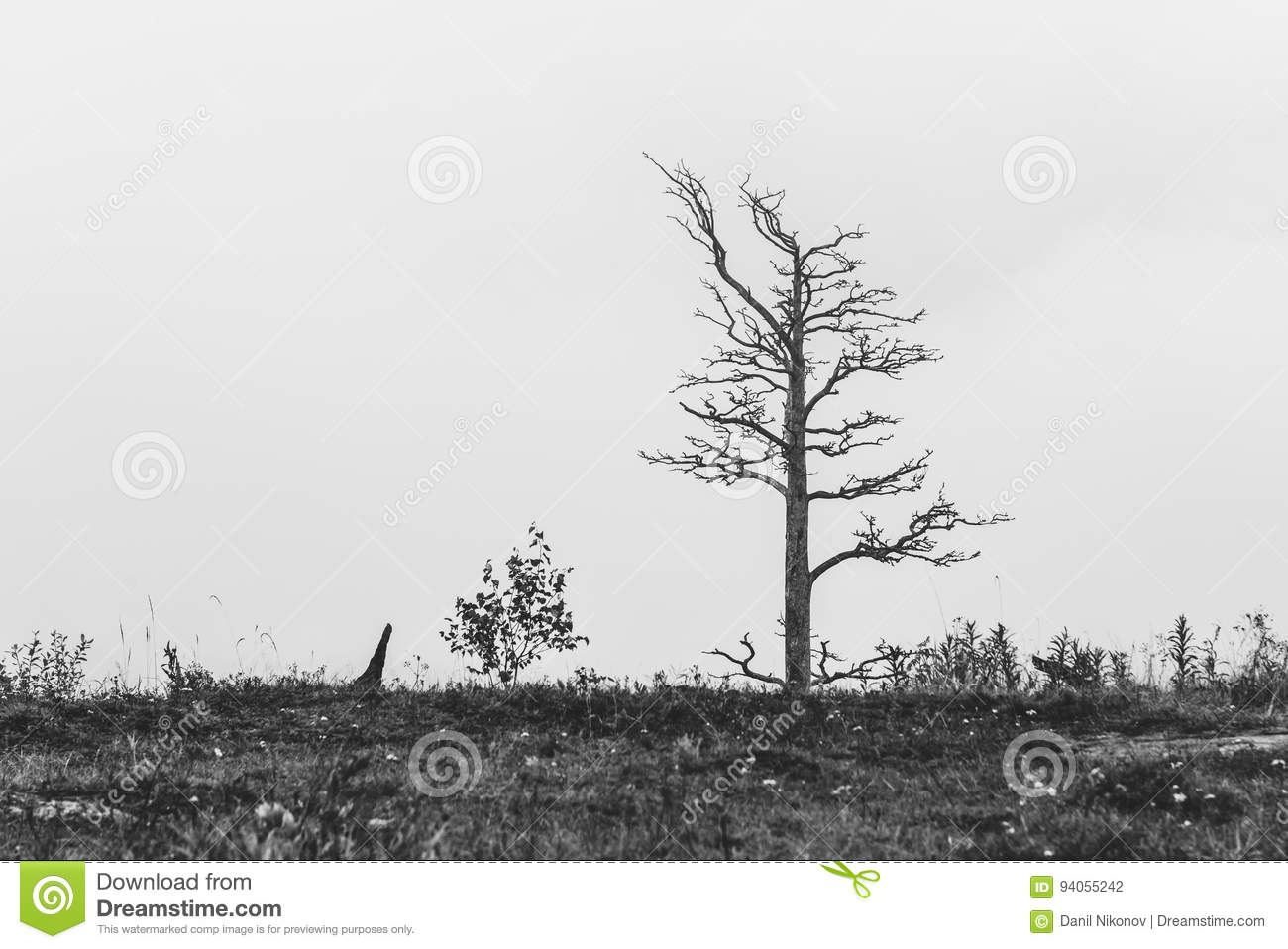Download Lonely dead tree stock photo. Image of landscape, branch - 94055242