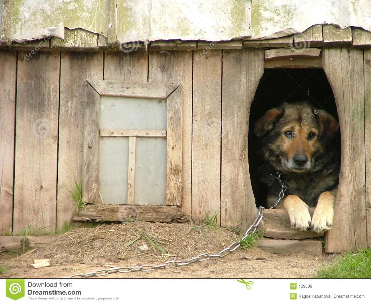 Download Lonely dog stock photo. Image of inside, locked, window - 159506