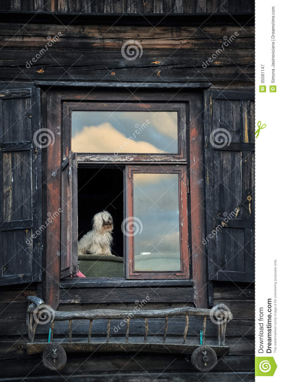 lonely dog looking through his window stock image
