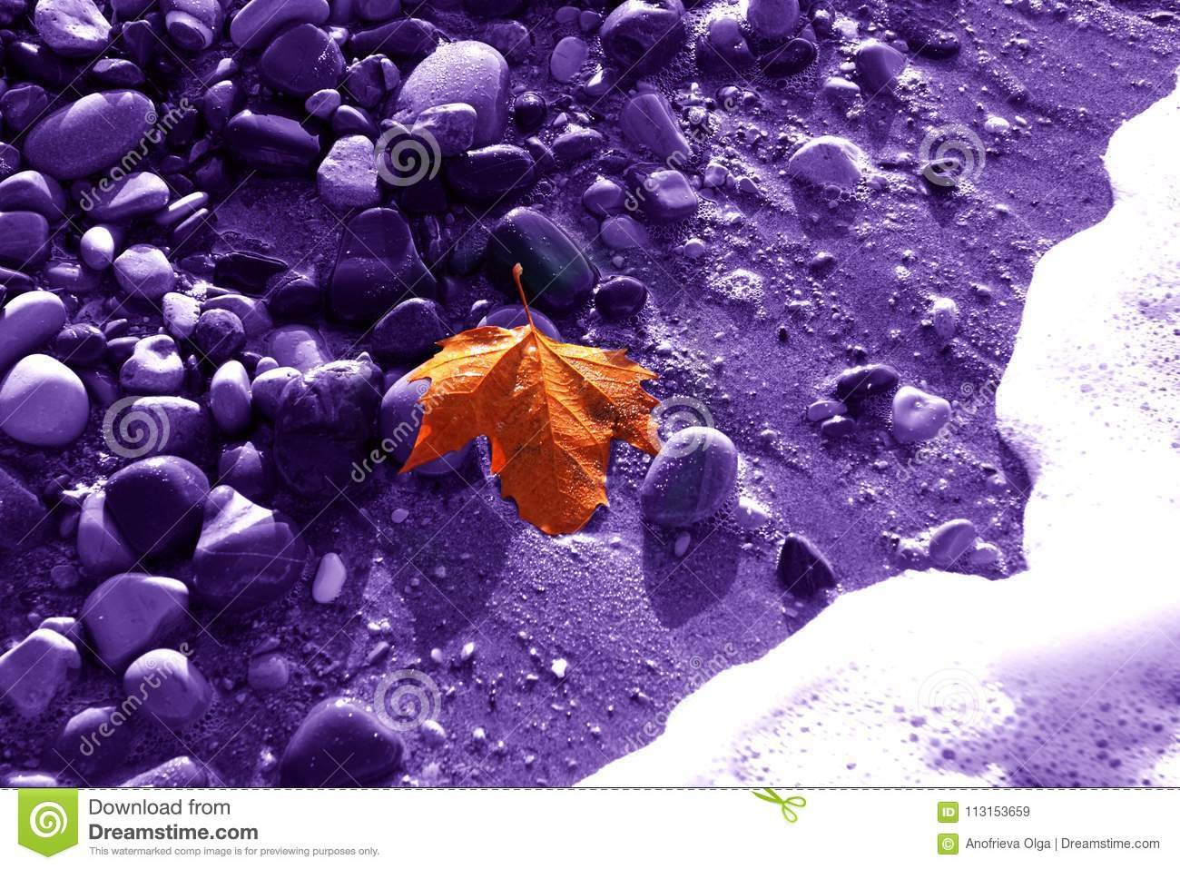 Lonely gold leaf of a maple on a violet background of damp stone