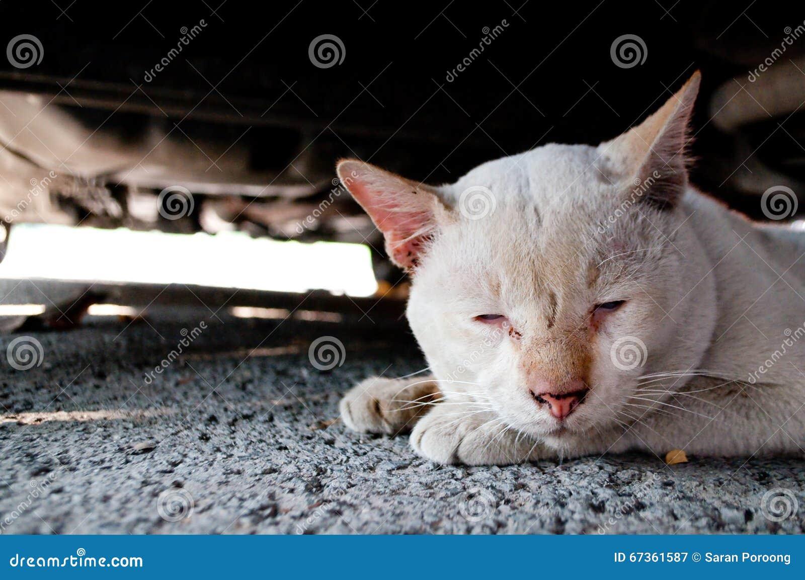 lonely sad cat - photo #15