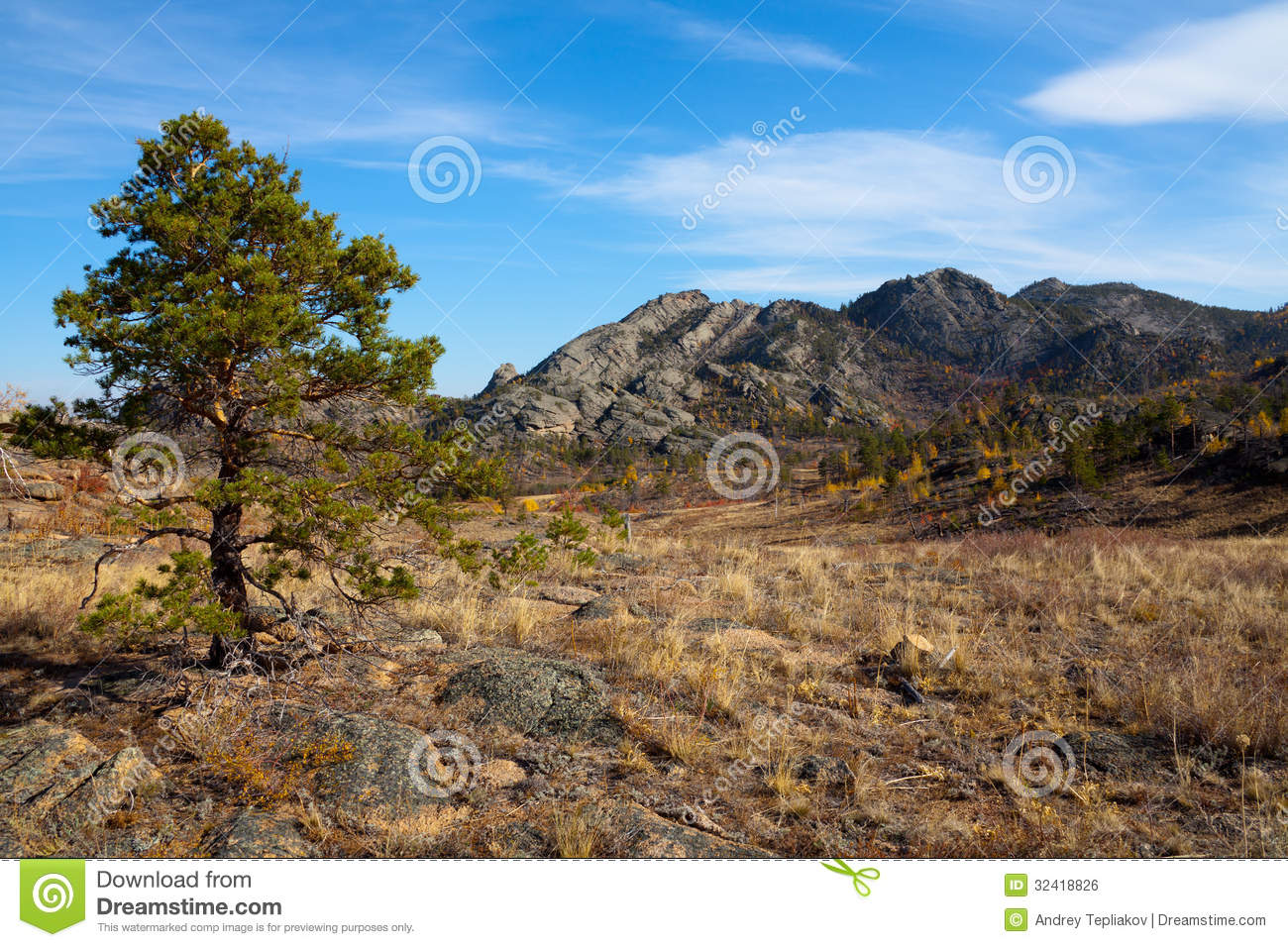 Royalty free stock image lonely pine tree in the desert mountains