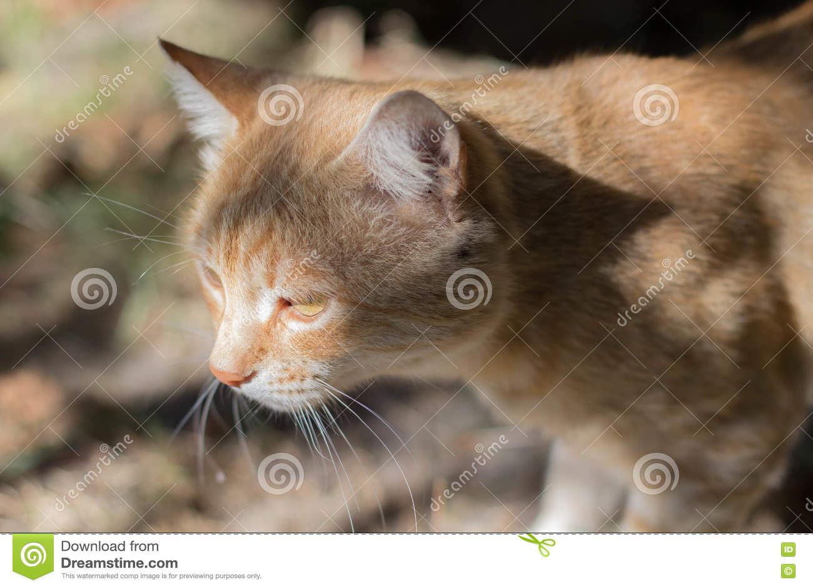 lonely sad cat - photo #7