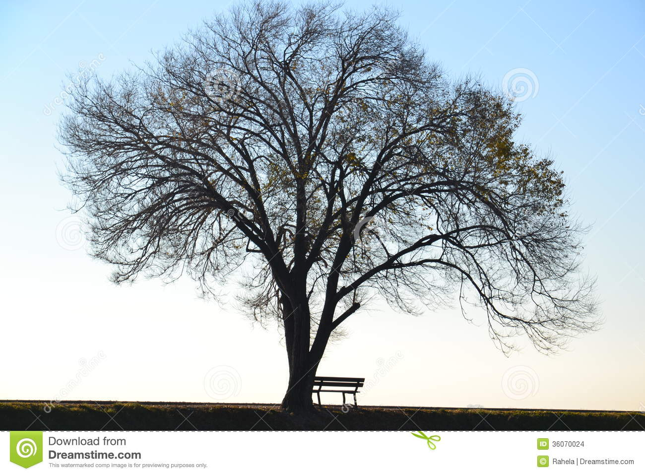 Lonely Tree And Bench Stock Photo Image Of Empty