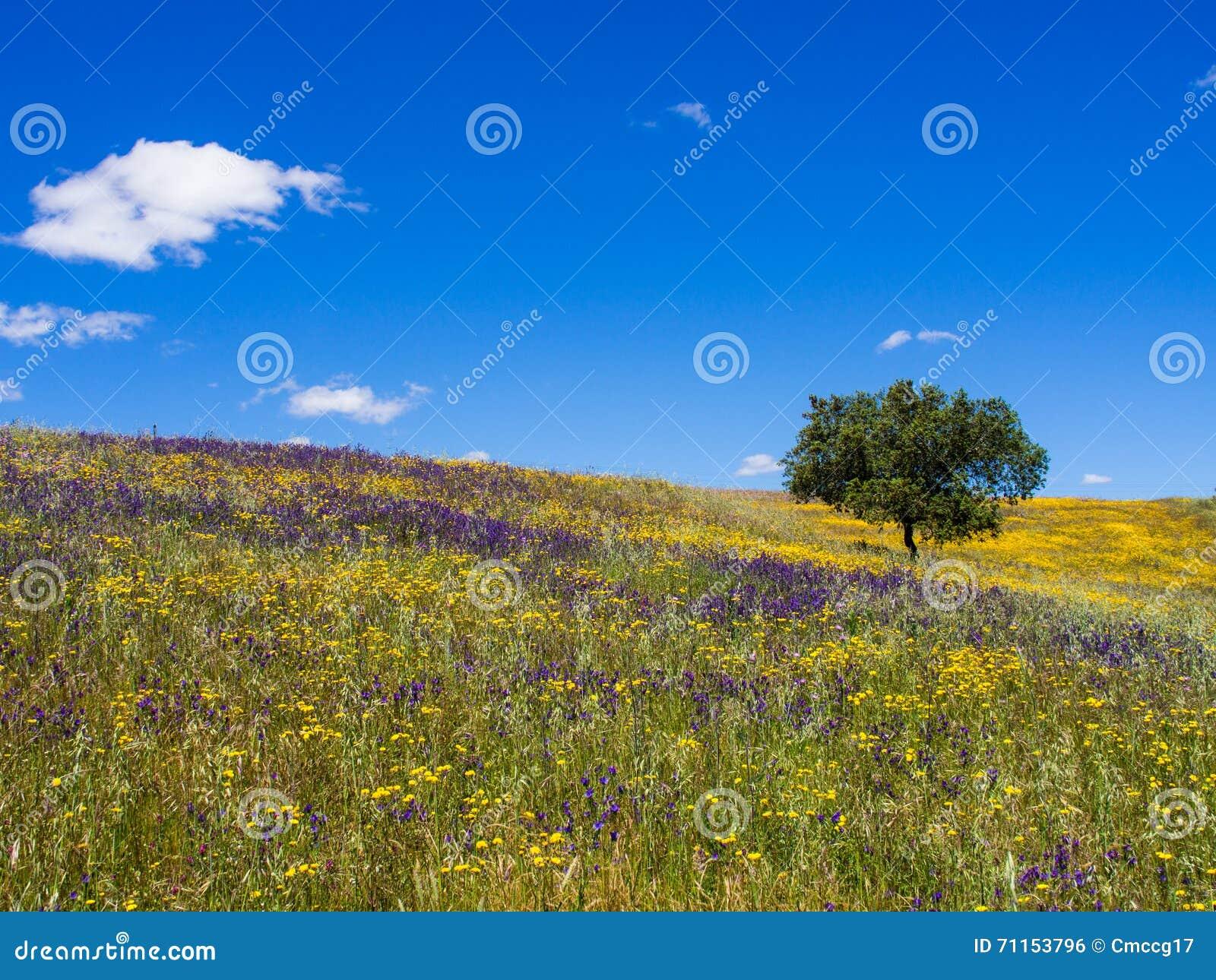 daisy field mountain sky - photo #28