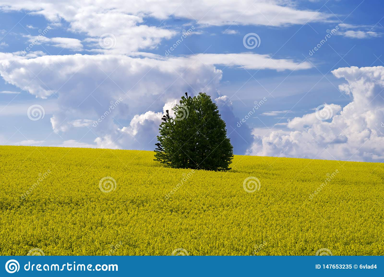 A lonely tree in the midst of a field of blooming canola against a blue sky with clouds