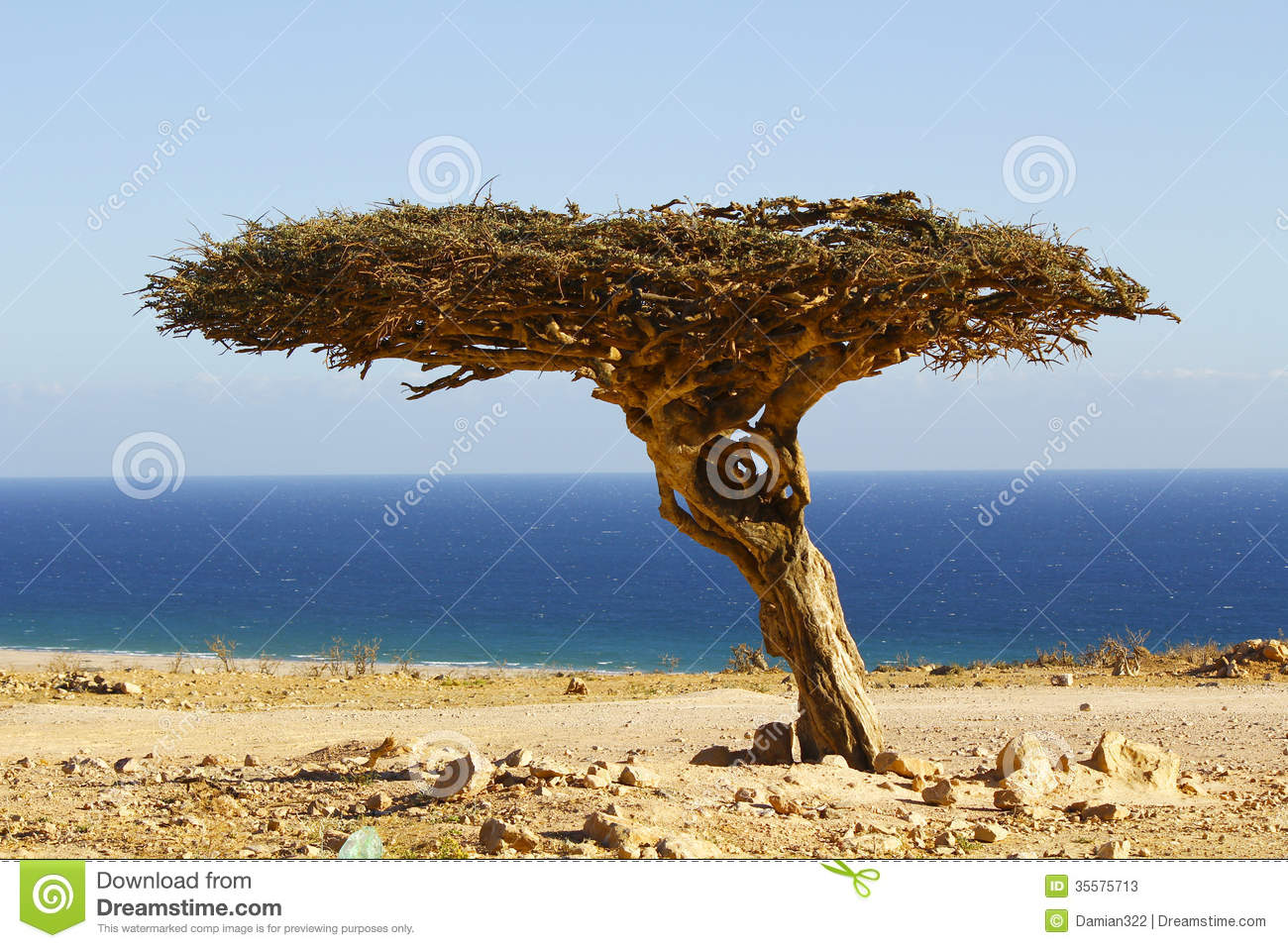 Lonely Tree In The Oman Desert Stock Photos - Image: 35575713