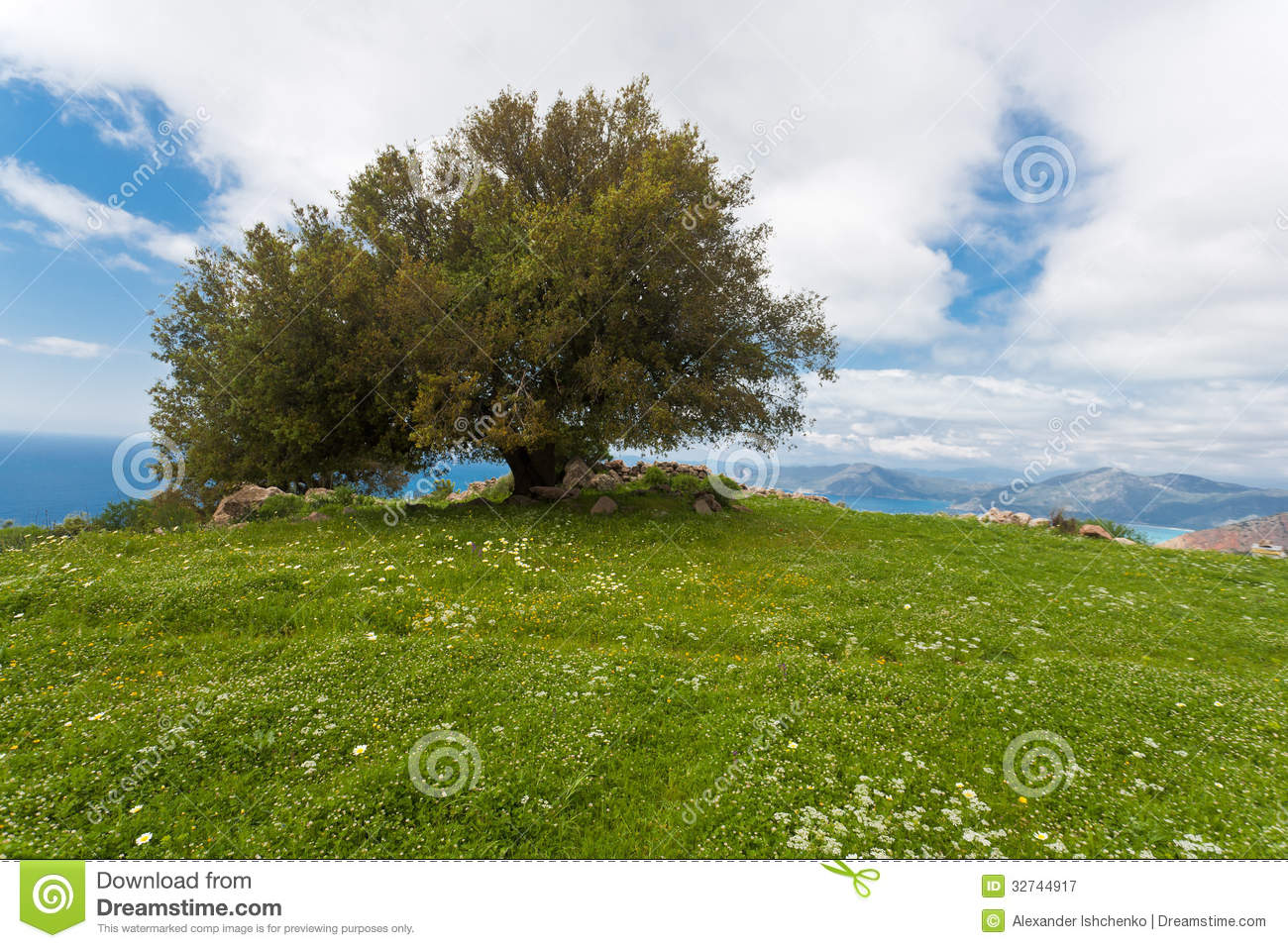Lonely tree royalty free stock photography image 32744917 for Seagrass for landscaping