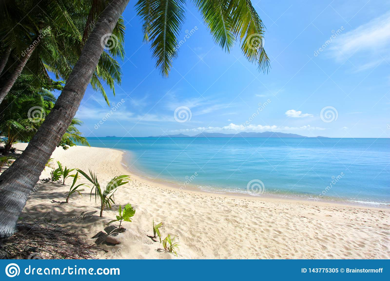 Lonely white sand beach, green palm trees, blue sea, bright sunny sky, white clouds background
