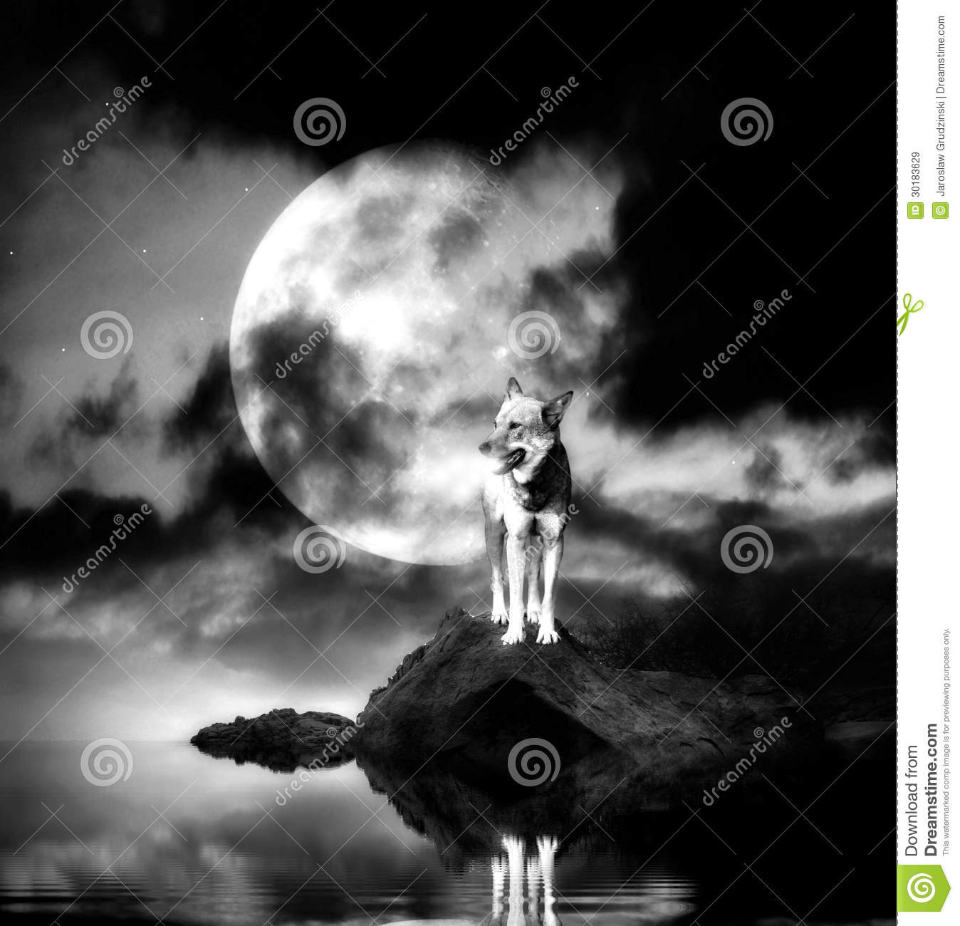 lonely wolf with full moon royalty free stock images