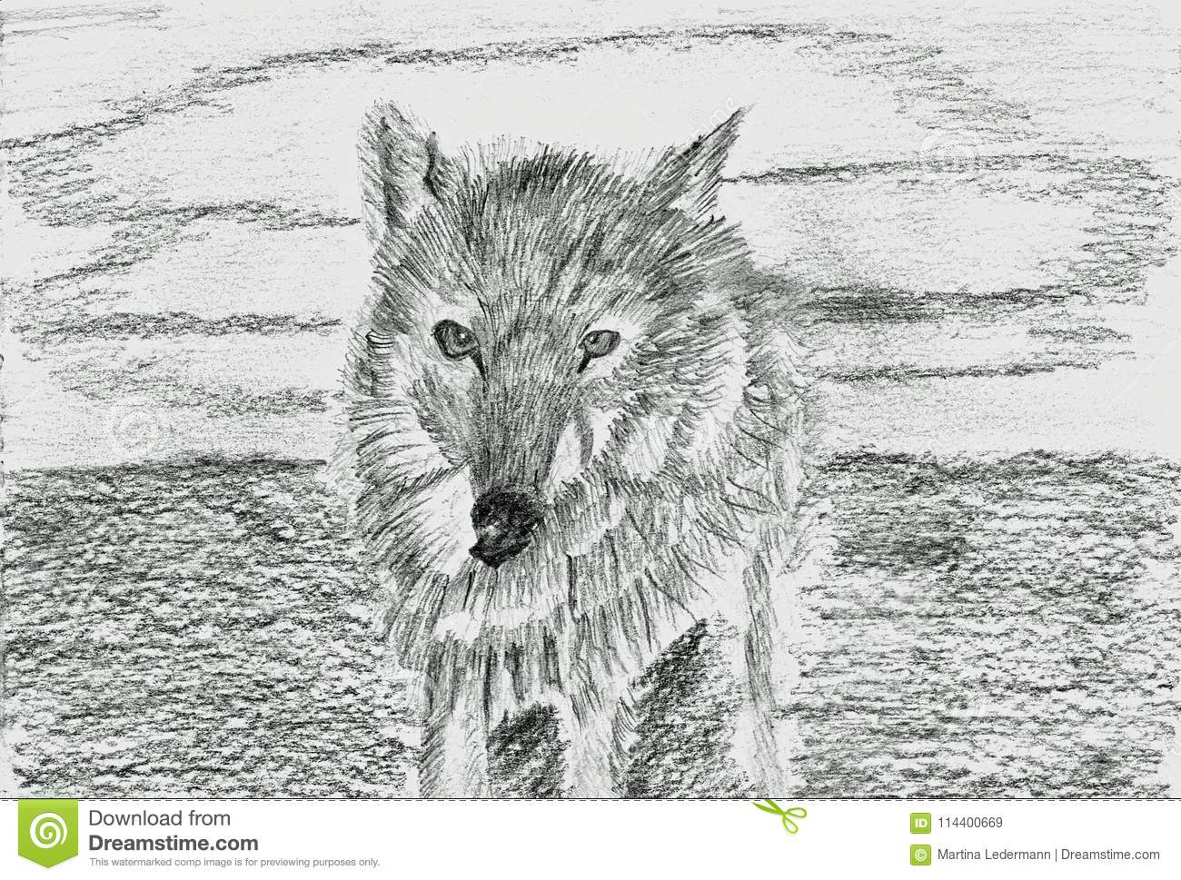 Lonely wolf lupus pencil drawing